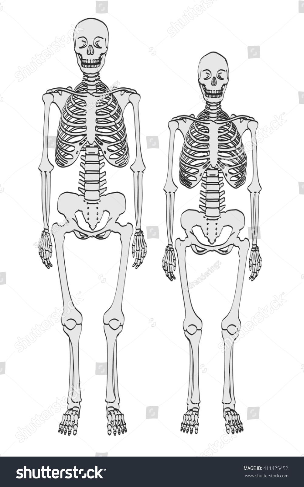 2 D Cartoon Illustration Skeletons Male Female Stock Illustration ...