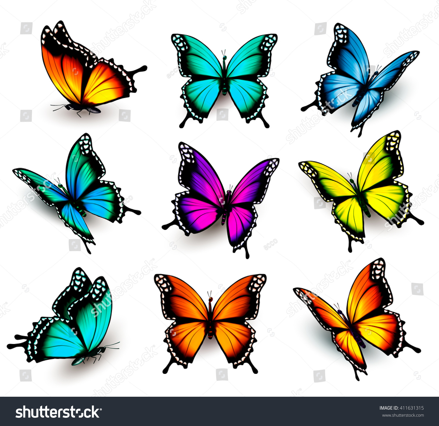 collection colorful butterflies flying different
