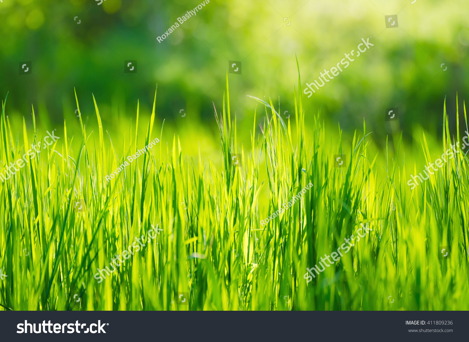 green grass fields suitable backgrounds wallpapers stock photo