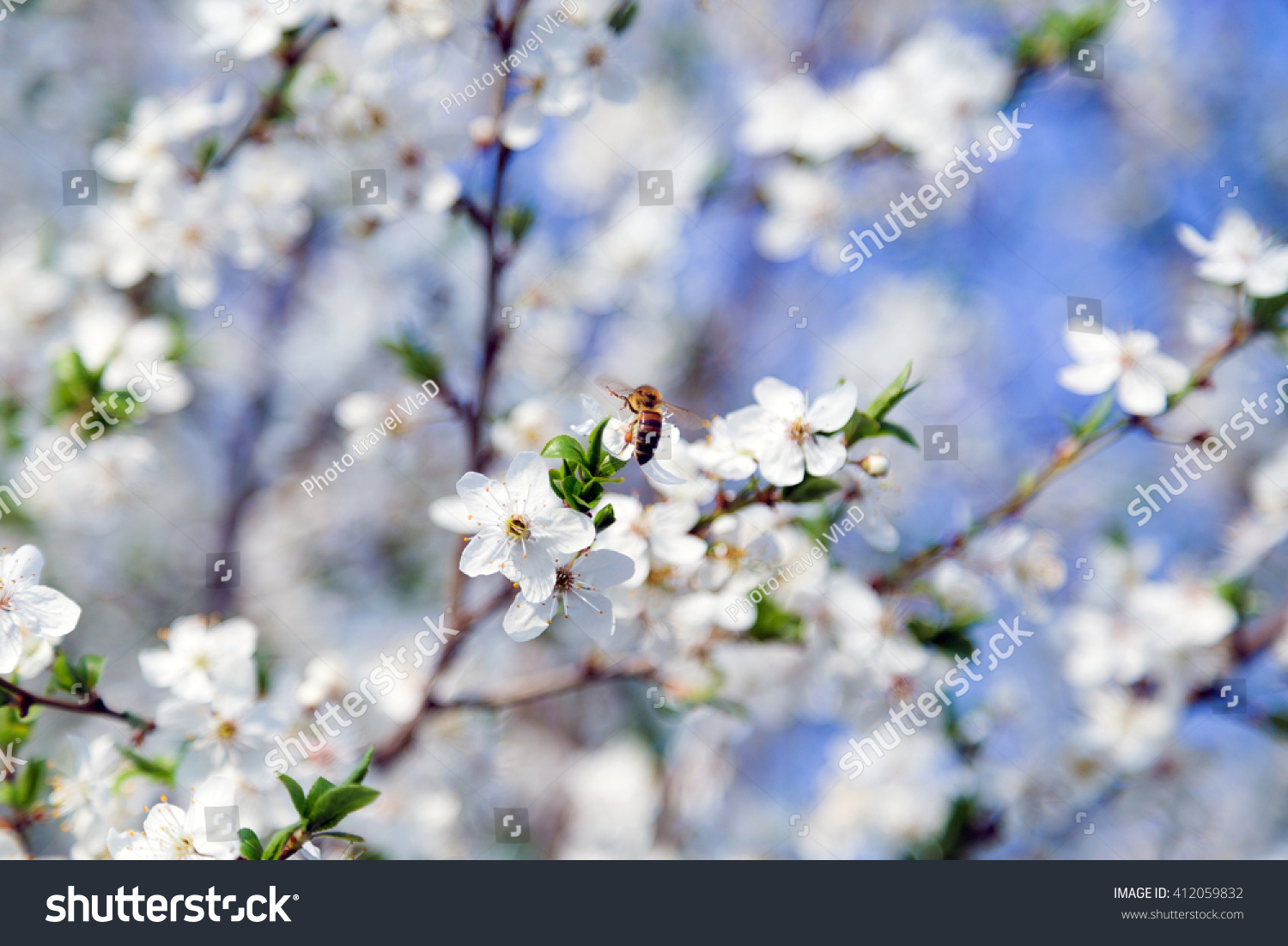 Spring Flowers Beautiful Nature Scene Blooming Stock Photo Edit Now