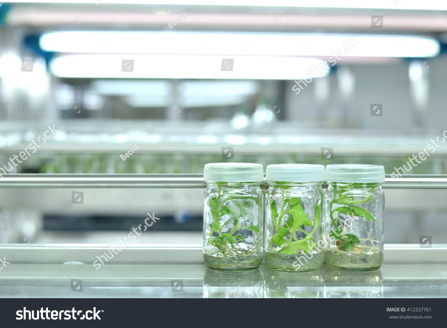 Plant Tissue Culture Science Research Laboratory Stock Photo ...