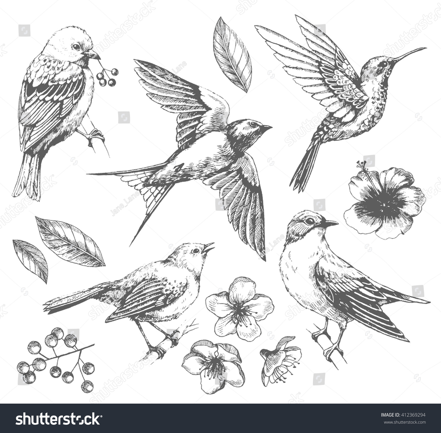 Line Drawing Of Animals And Birds : Set birds flowers line drawings ink stock vector