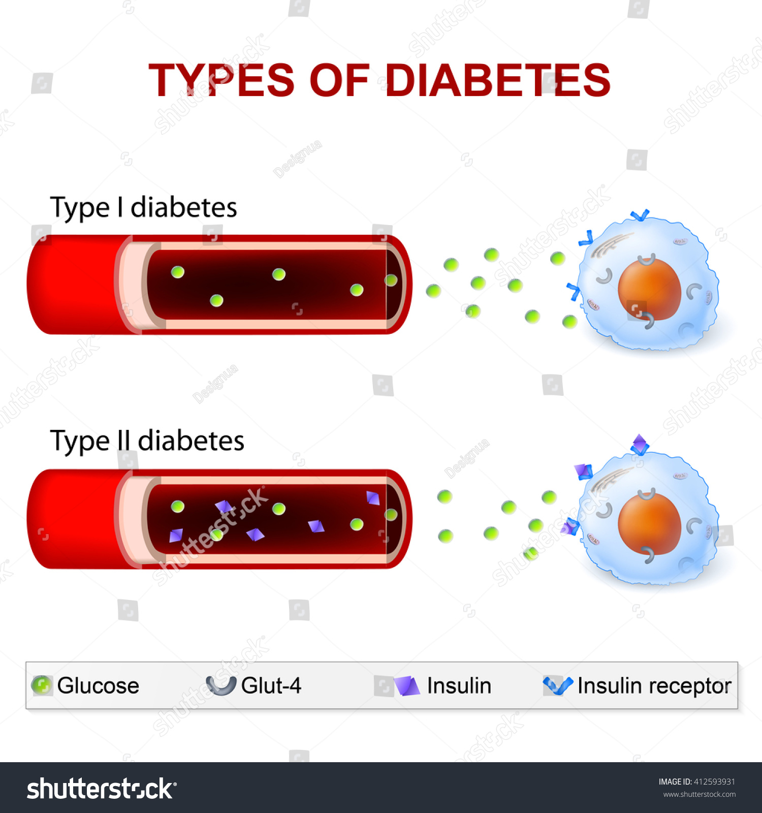 diabetes tipo 1 receptores de insulina diabetes