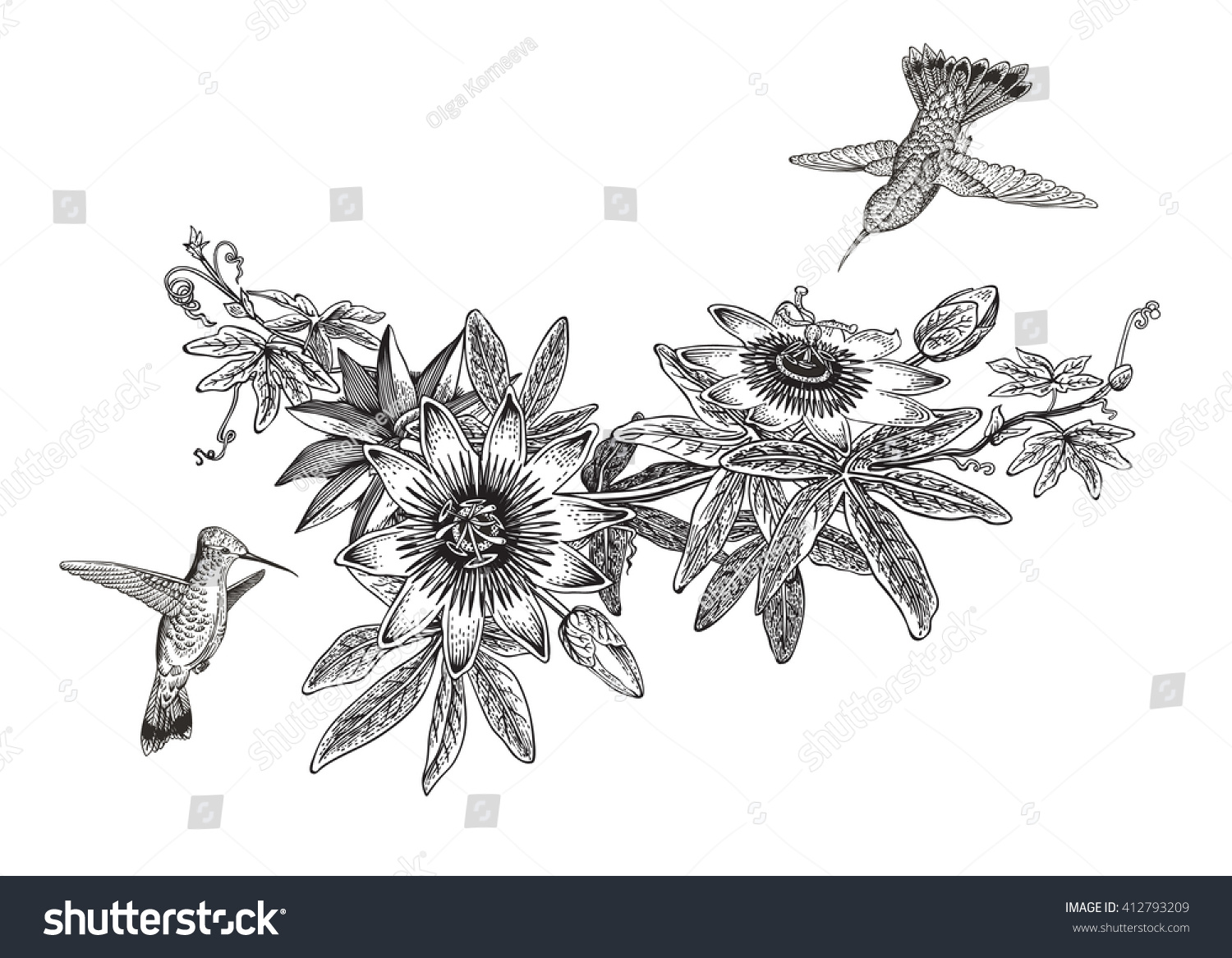 Botanical illustration black and white - photo#10