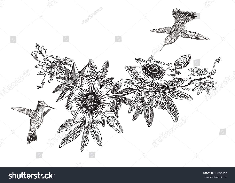 Botanical illustration black and white - photo#10
