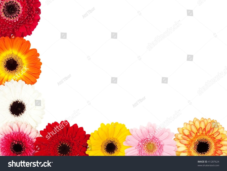 Colorful daisy flowers border isolated on stock photo royalty free colorful daisy flowers border isolated on white izmirmasajfo