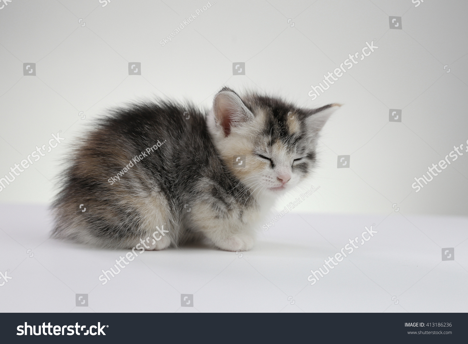 5 Week Old Kitten Sleeping Stock Shutterstock