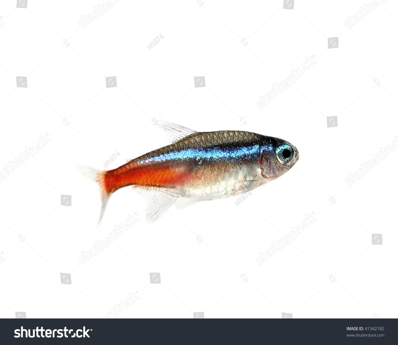 Fresh water fish stock photo 41342182 shutterstock for Sweet water fish