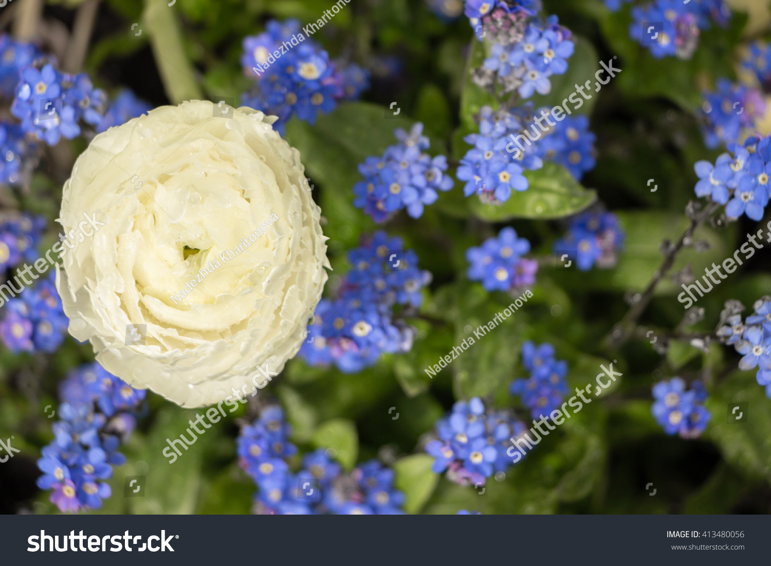 Beautiful Plant Background Two Types Flowers Stock Photo Edit Now
