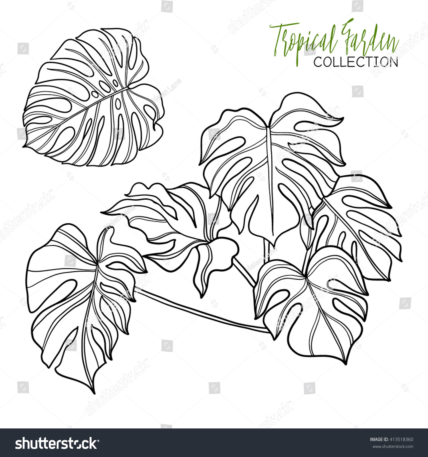 Monstera Tropical Plant Vector Illustration Coloring Stock Vector