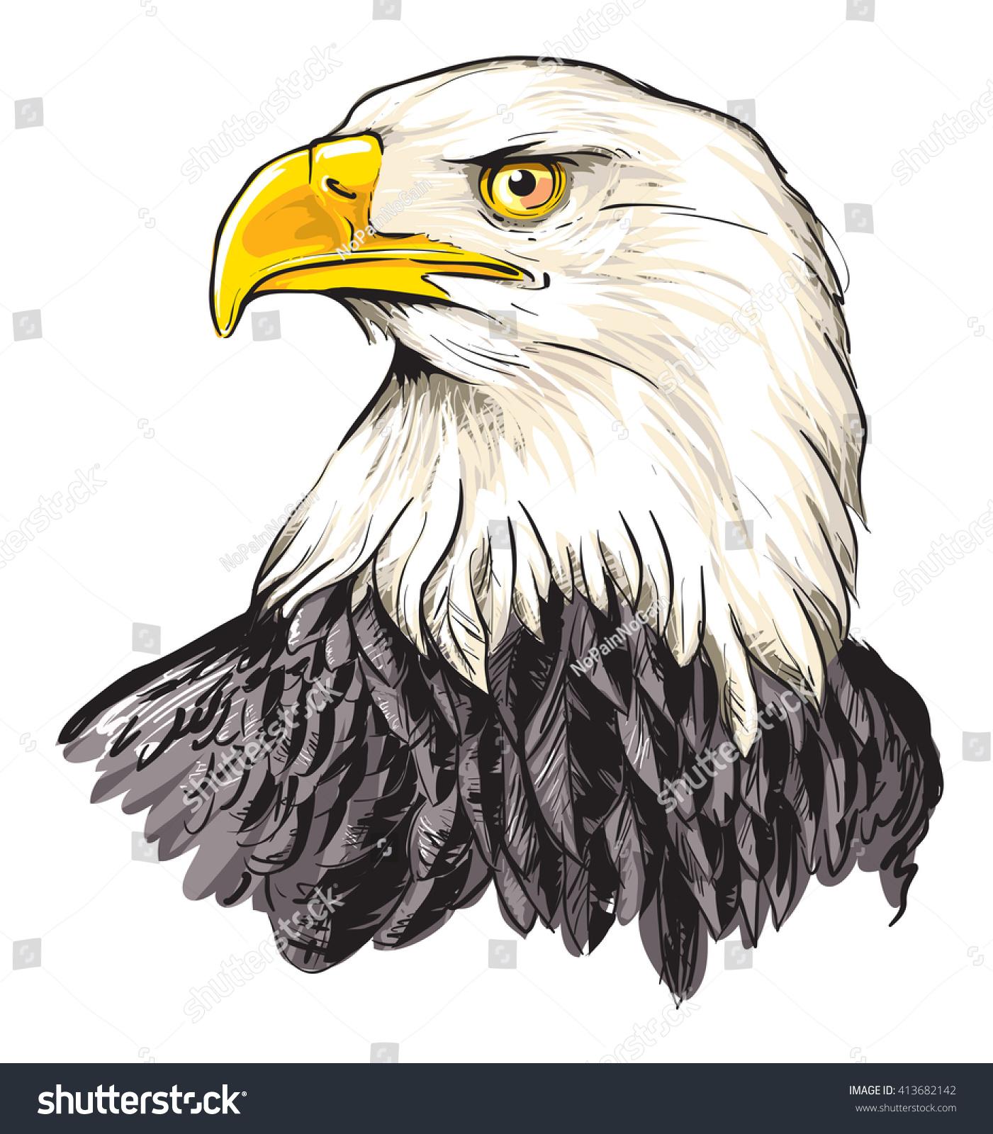 Bald Eagle Haliaeetus Leucocephalus Stock Vector (Royalty Free ...