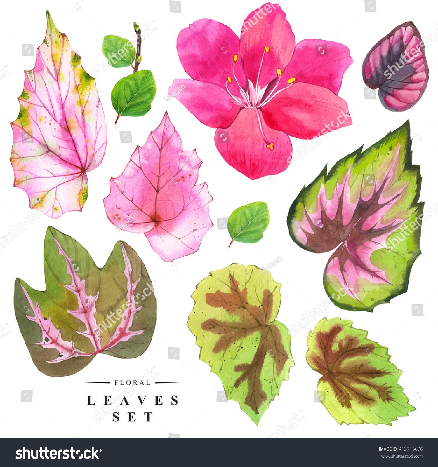 Botanical Illustration Realistic Tropical Flowers Green Stock