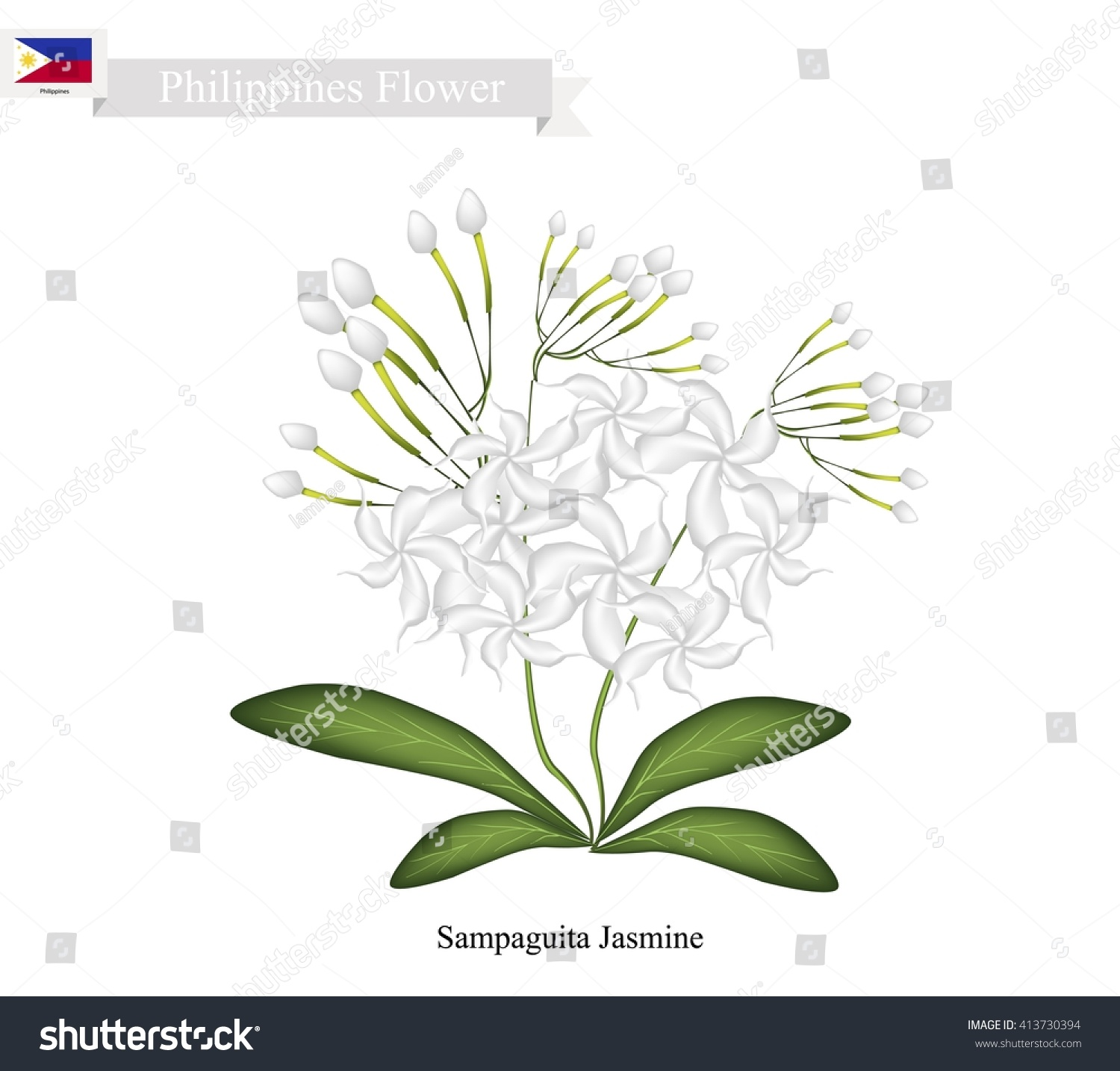 Philippines flower illustration sampaguita jasmine arabian stock philippines flower illustration of sampaguita jasmine or arabian jasmine the national flower of philippines izmirmasajfo