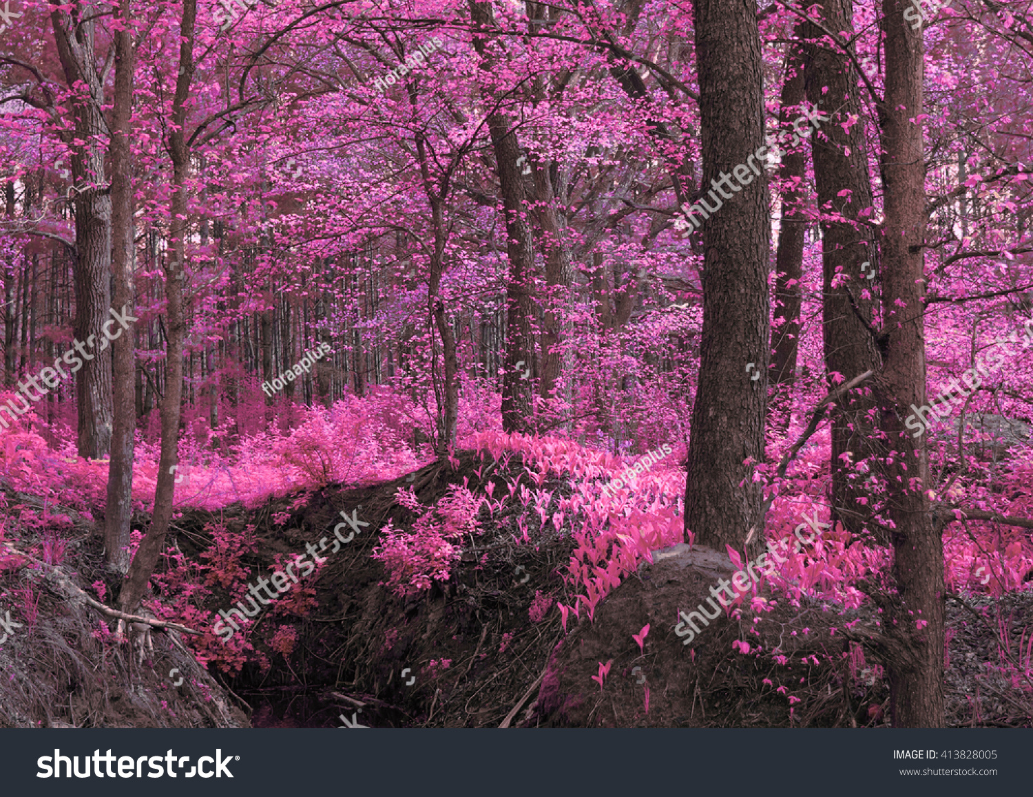 stock-photo-magic-wood-pink-purple-unusu