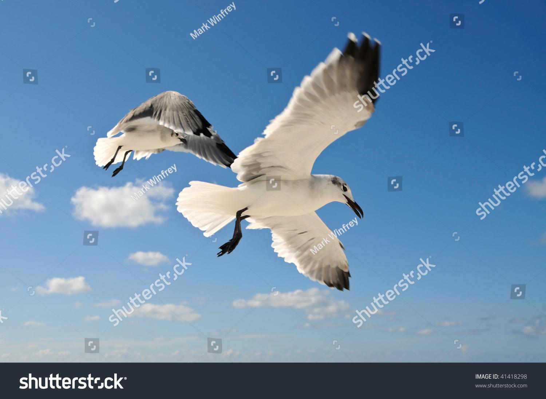 stock-photo-seagulls-in-flight-41418298.