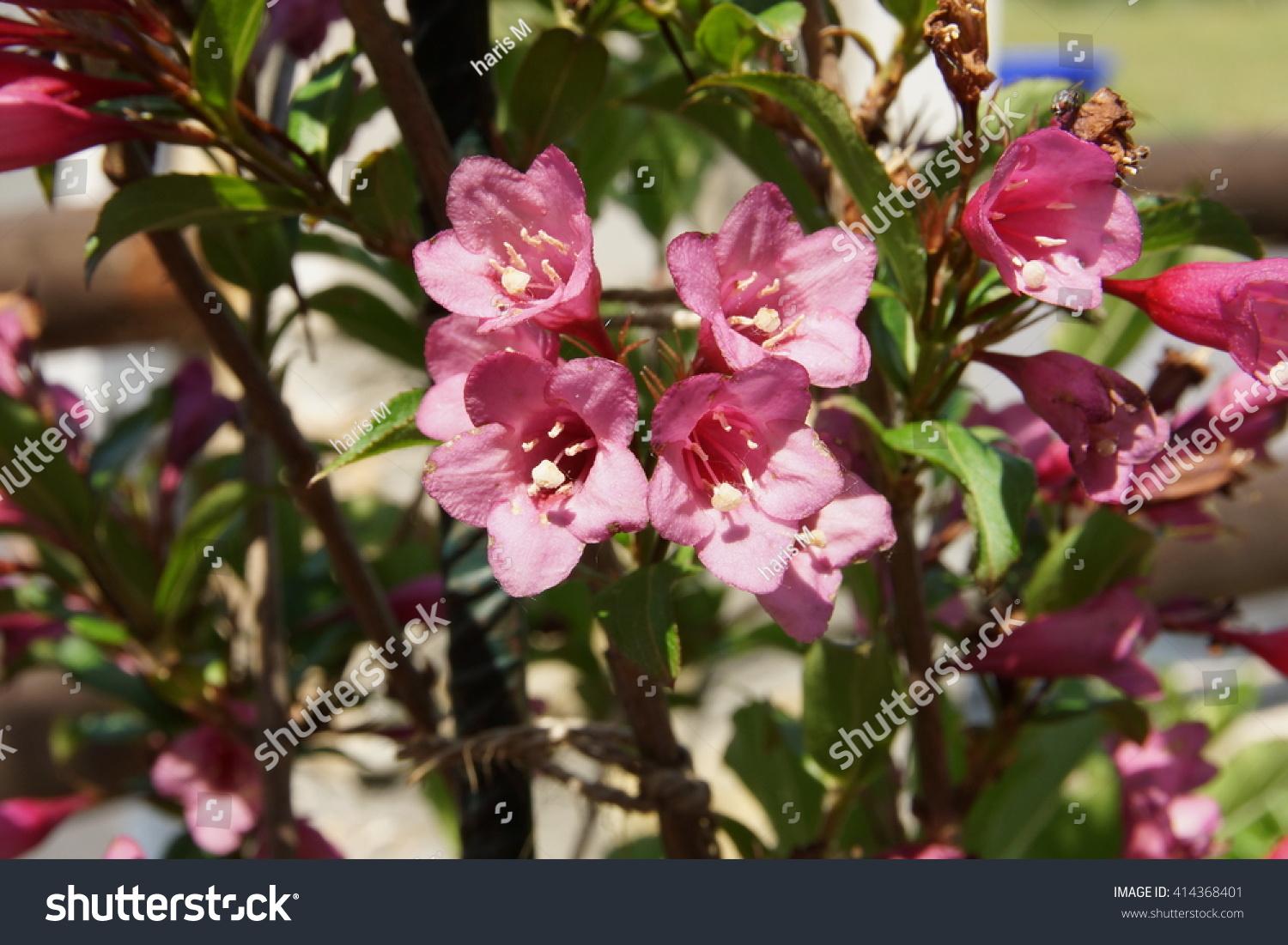 Pink Bells Small Flowers Stock Photo Edit Now 414368401 Shutterstock
