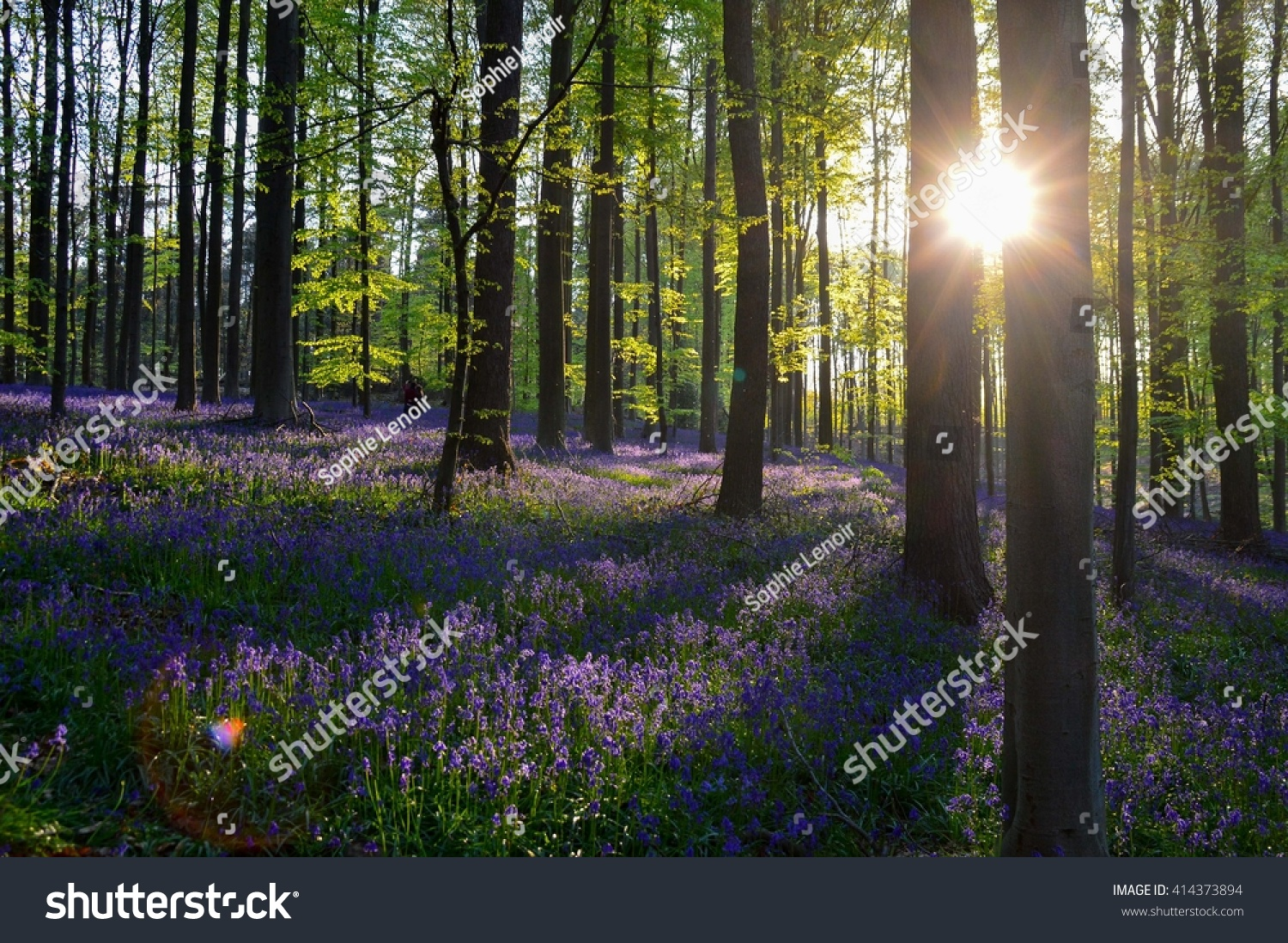 Tapestry Purple Flowers Spring Forest While Stock Photo Image