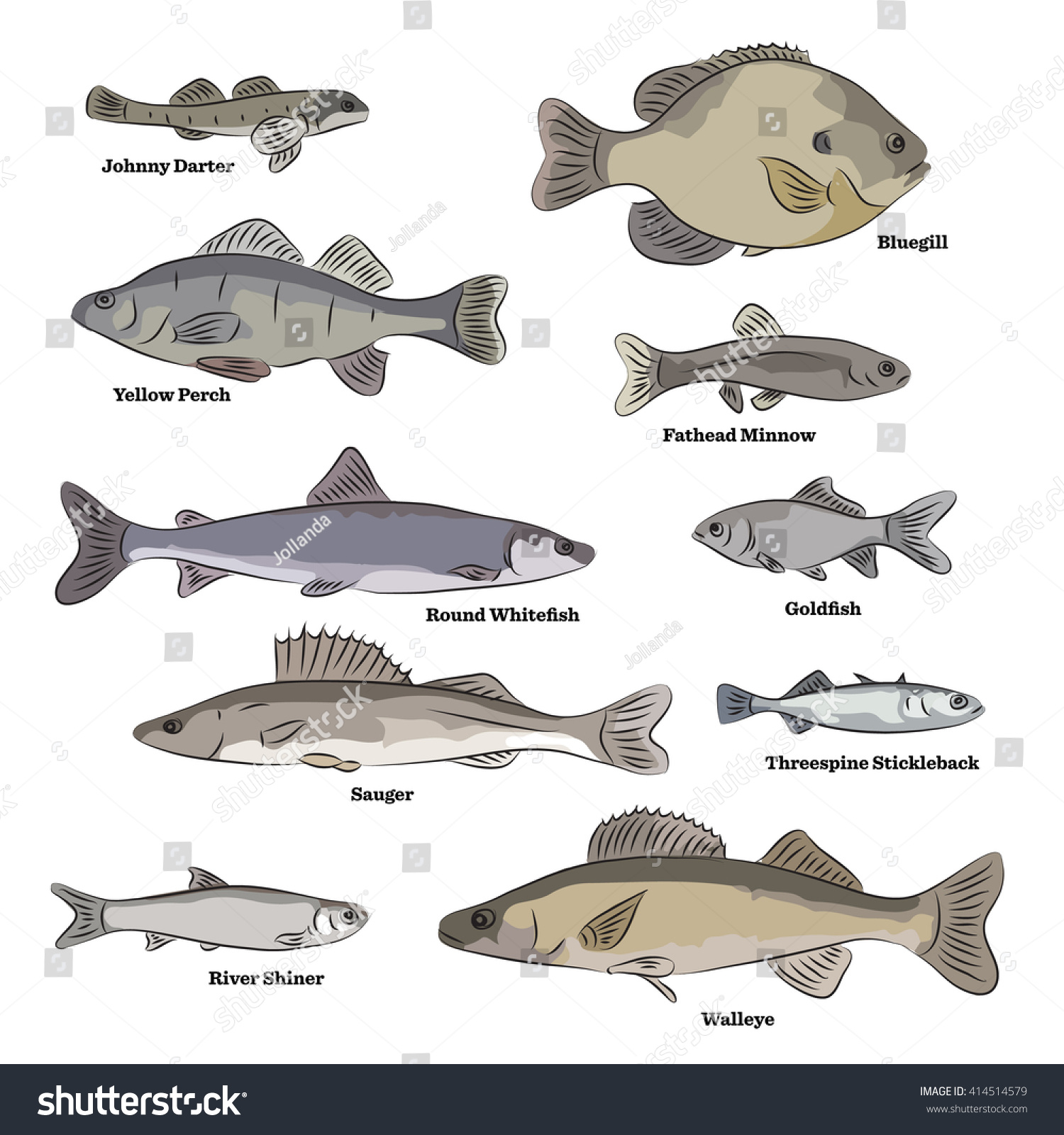 Freshwater fish dace - Freshwater Fish Illustrations Logperch Shiner Pumpkin Seed Lamprey Dace Quillback