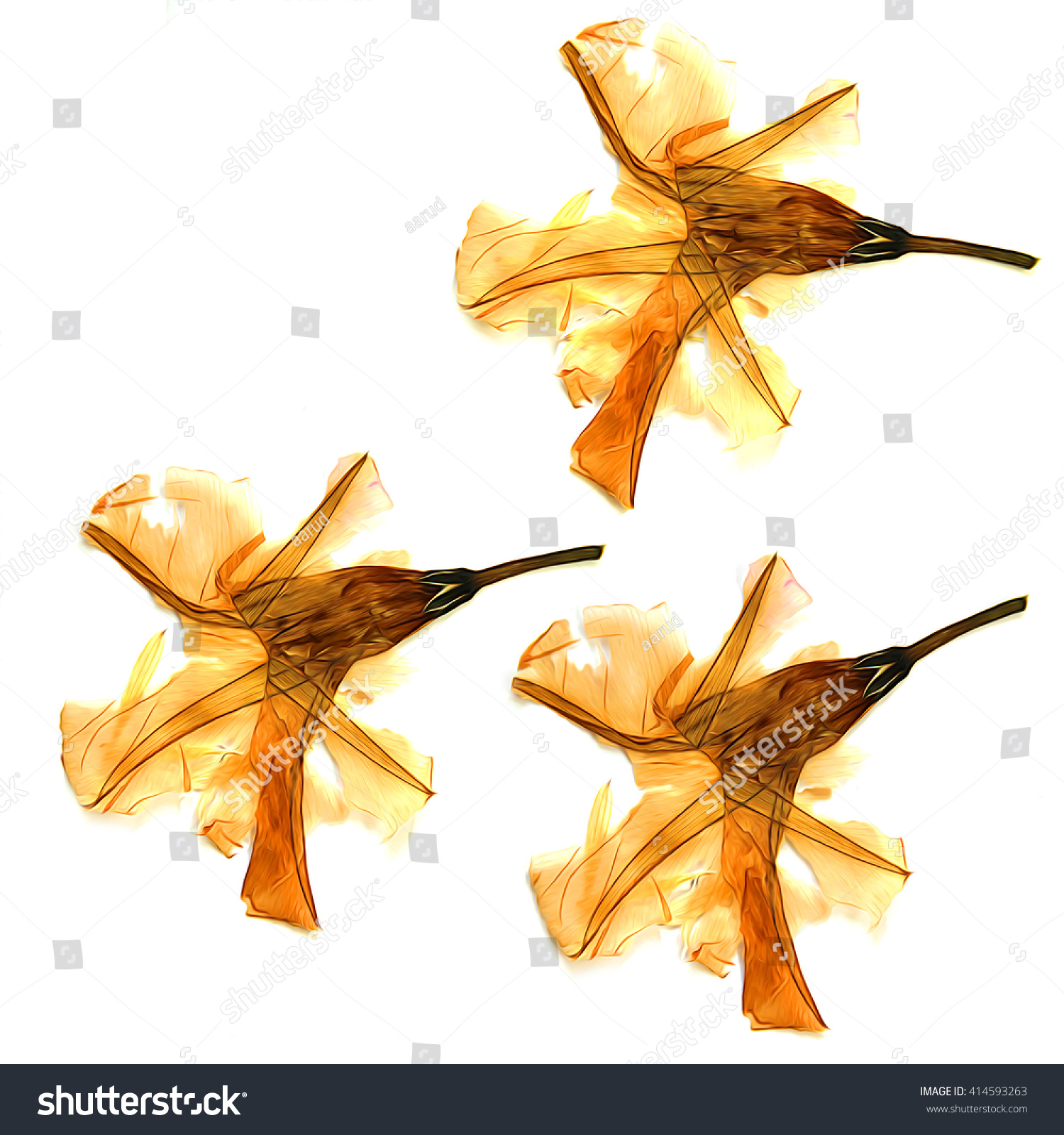 How to scrapbook dried flowers - Oil Paint Dry Yellow And Orange Flowers Alstroemeria Draw Object Isolated Flower Set On White Background