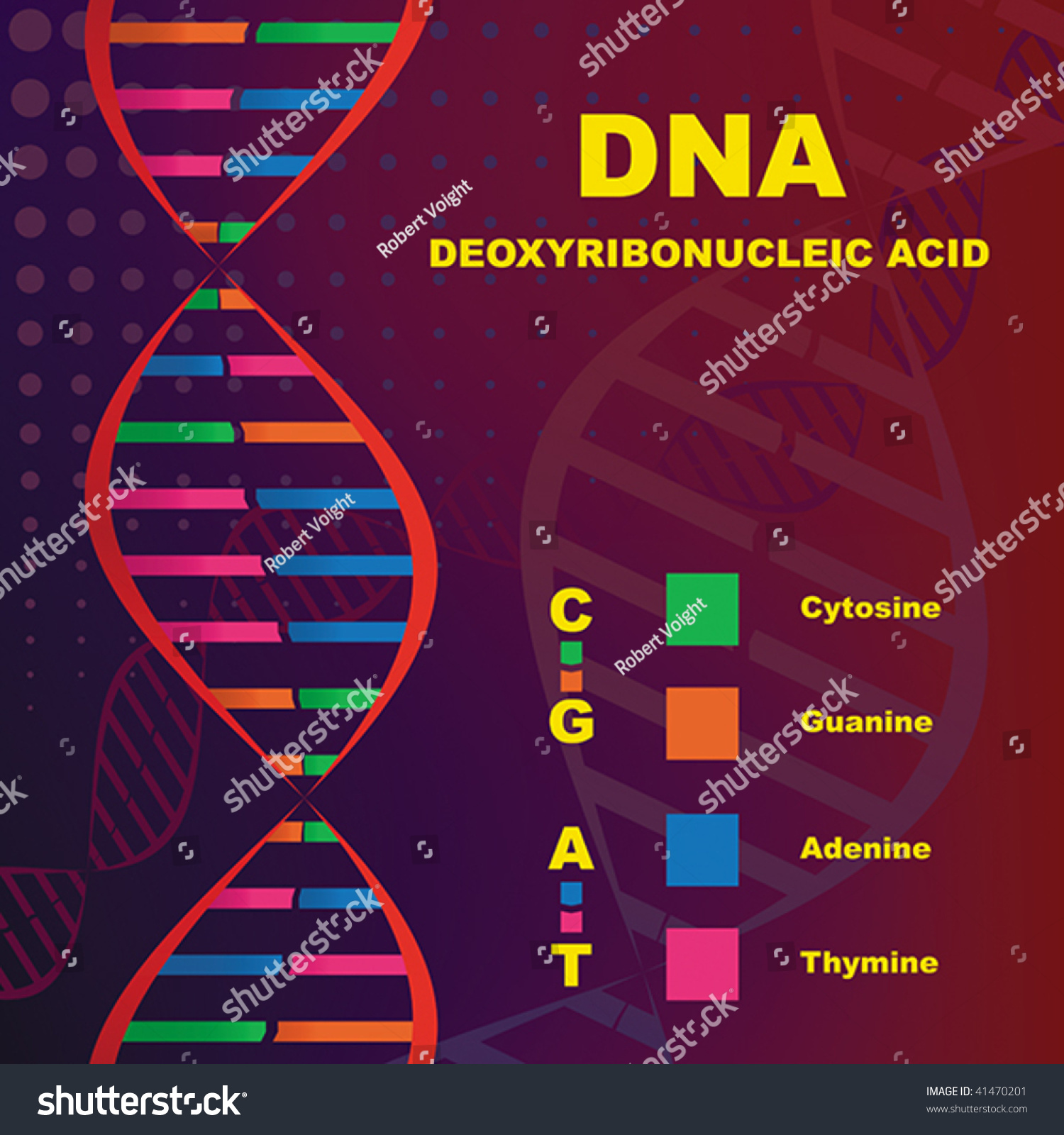 an introduction to dna or deoxyribonucleic acid Dna – an introduction, the open university, biology, itunes u,  deoxyribonucleic acid, or dna, has fascinated and excited scientists for over 140 years.
