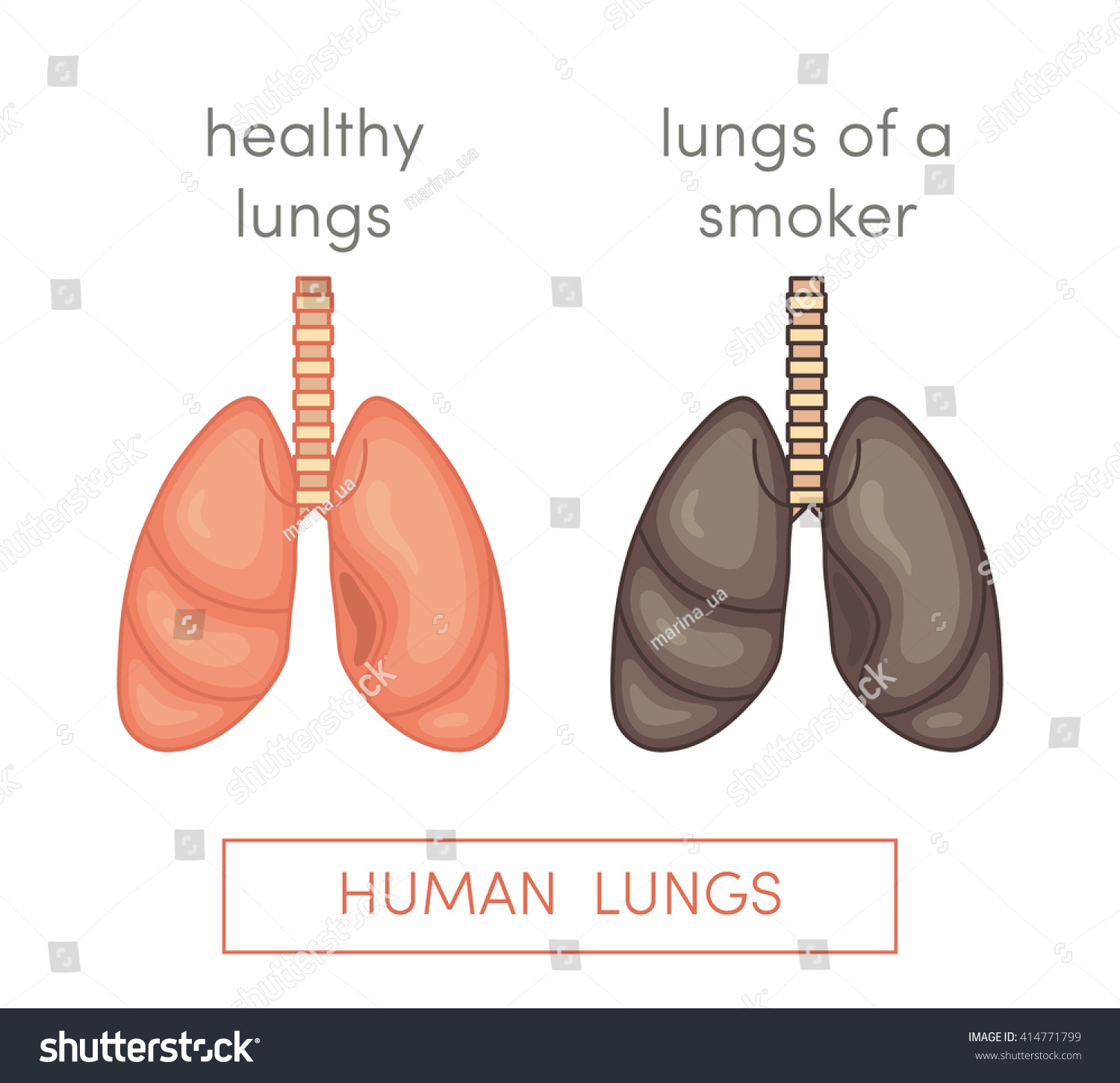 Healthy Lungs Smokers Lungs Simple Vector Stock Vector ...