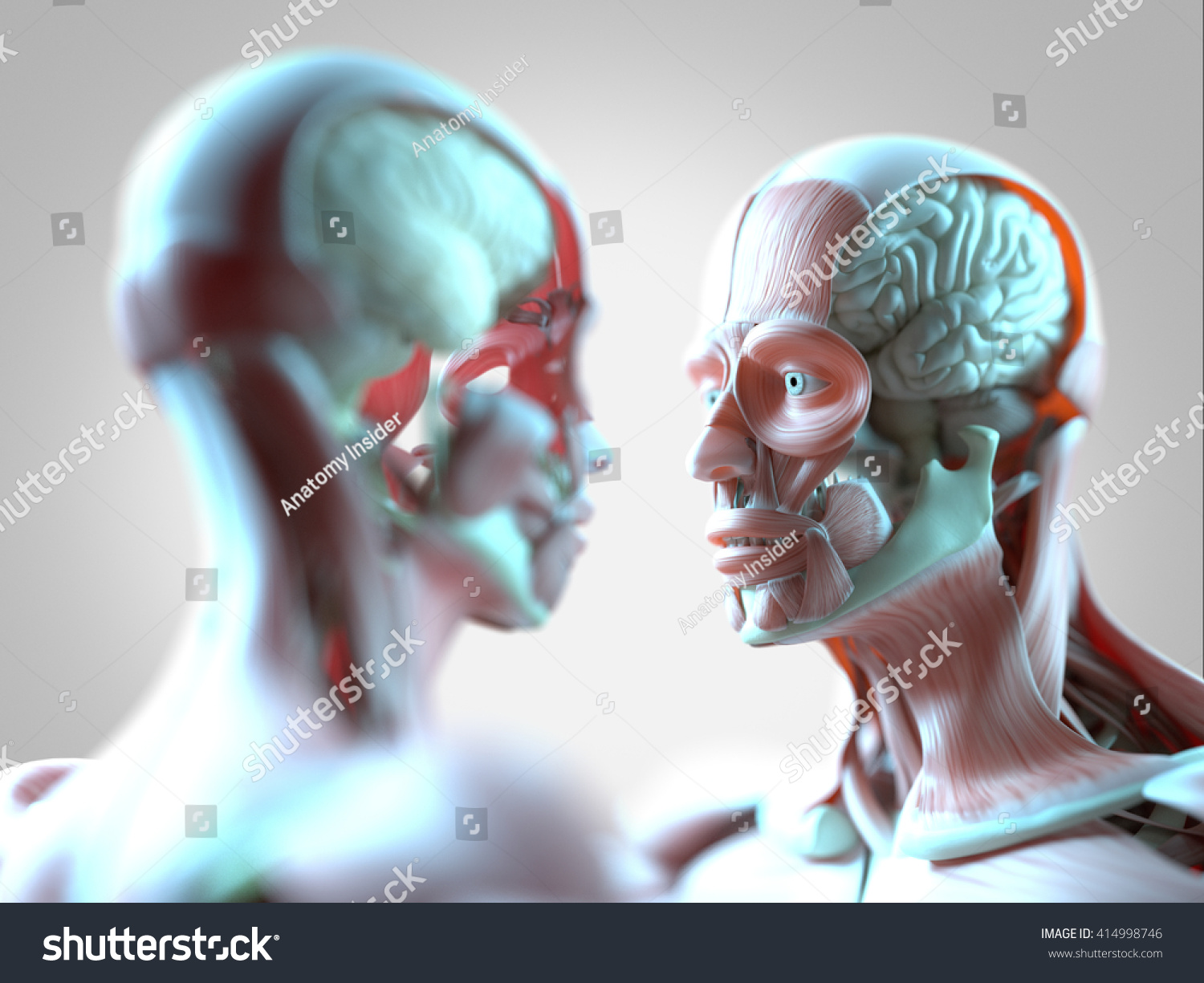 Facing Human Anatomy Models Male Female Stock Illustration 414998746 ...