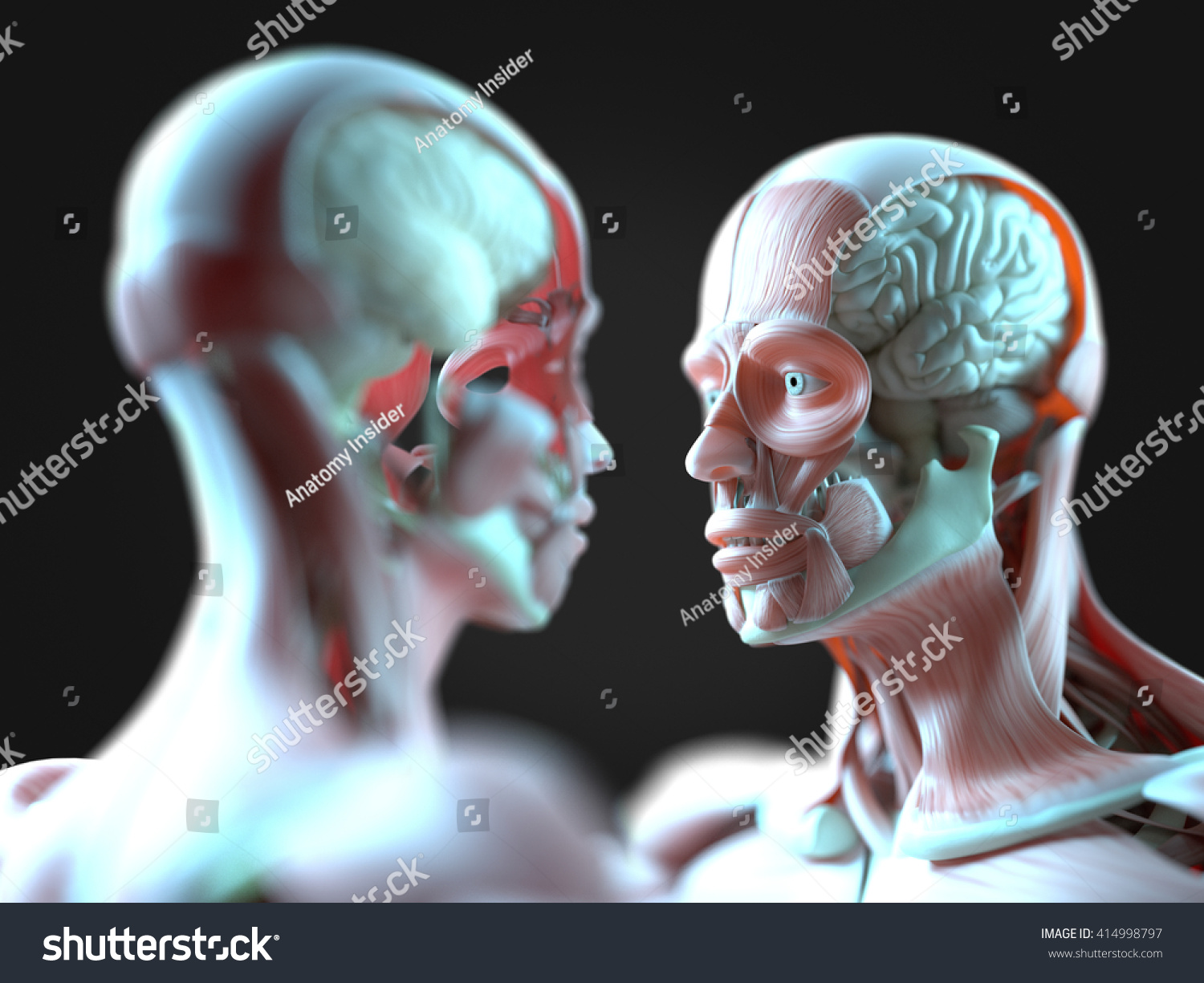 Facing Human Anatomy Models Male Female Stock Illustration 414998797 ...