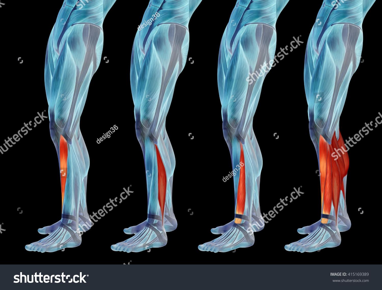 Concept 3 D Human Lower Leg Anatomy Stock Illustration 415169389
