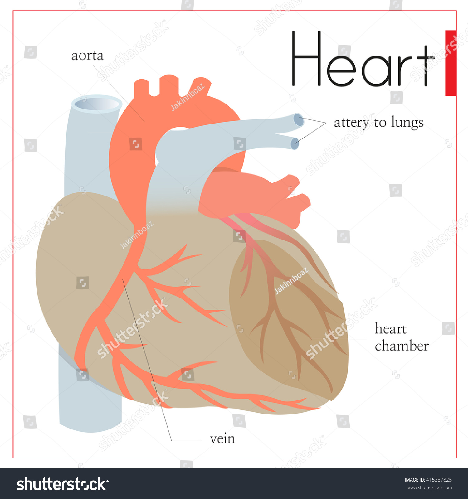 Diagram Important Parts Inside Heart Stock Vector Royalty Free