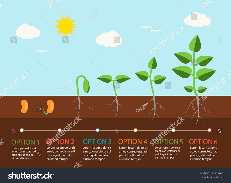 How plants grow 81