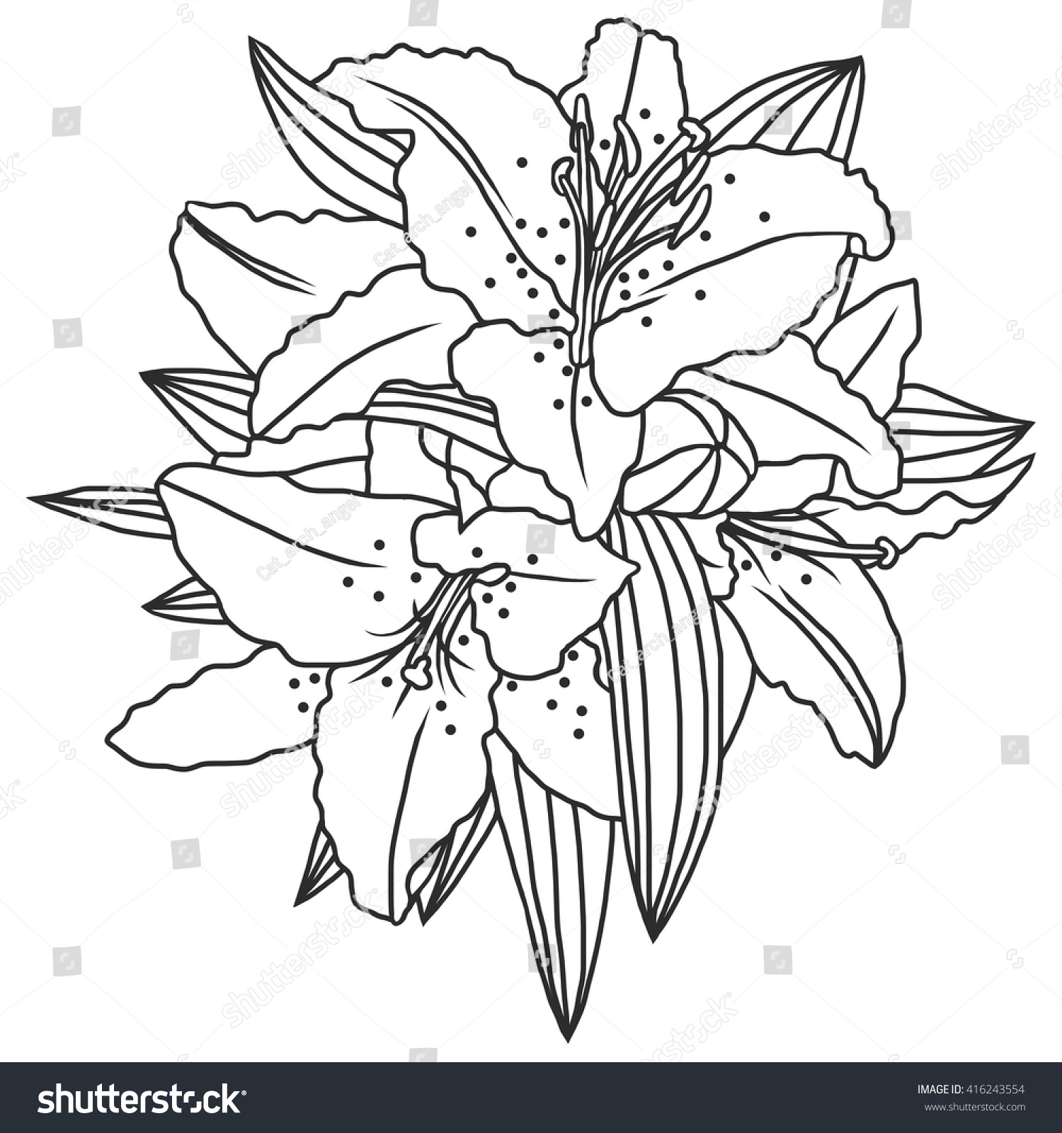 Line Drawing Lily : Line drawing lily flowers leaves hand stock vector