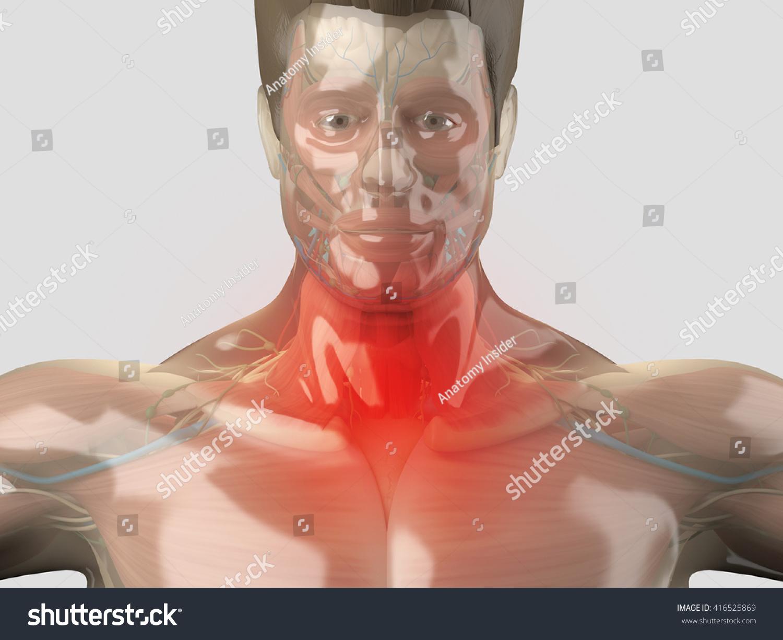 Human Anatomy Sore Throat Cold Flu Stock Illustration 416525869 ...
