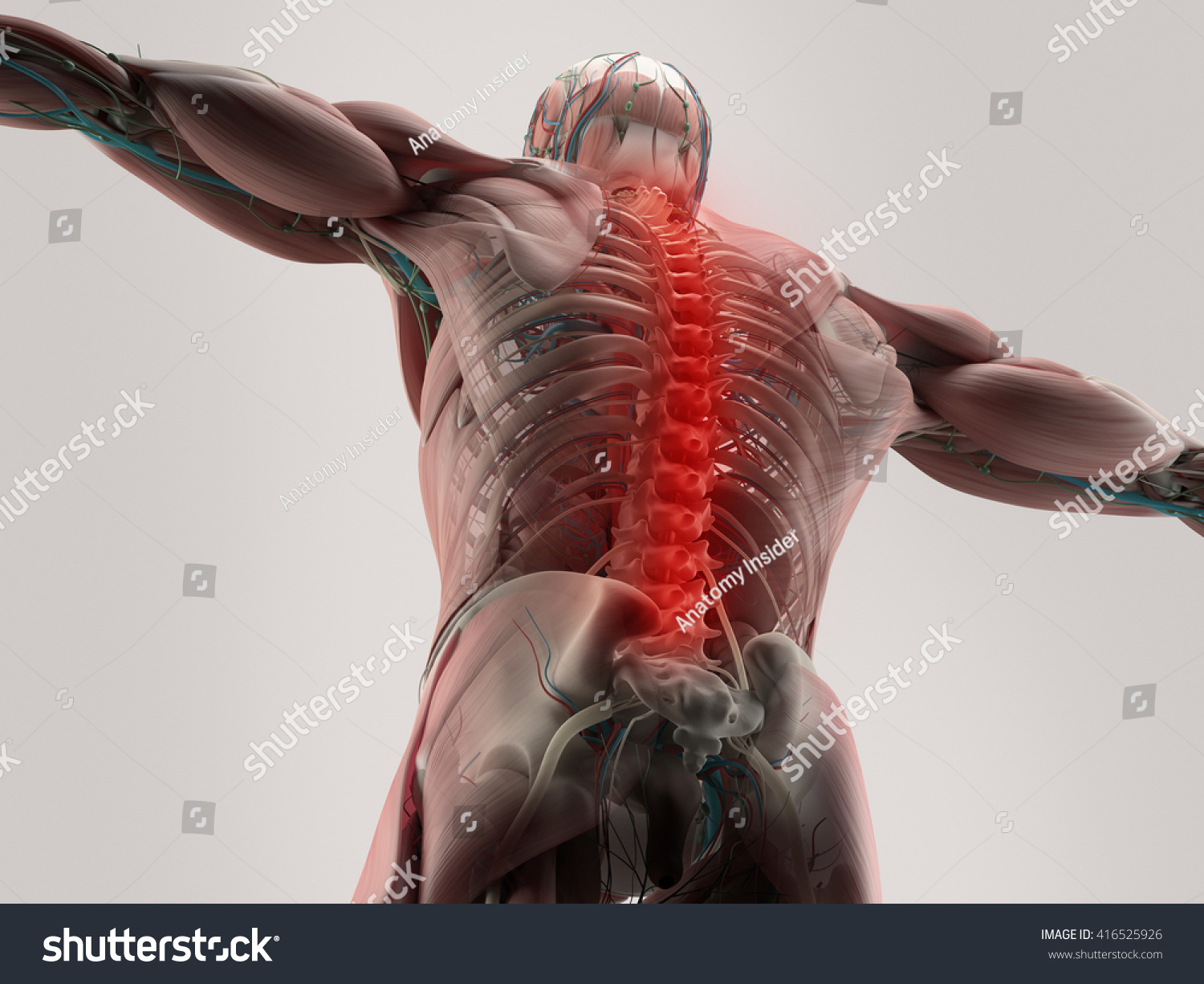 Human Anatomy Spine Back Pain 3 D Stock Illustration 416525926 ...