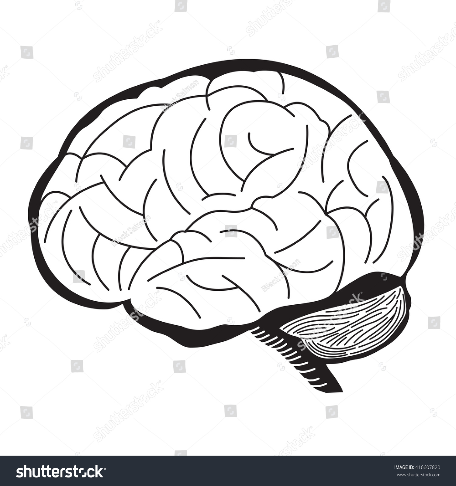 Black And White Of Human Brain Outline Draw Illustration Ez Canvas