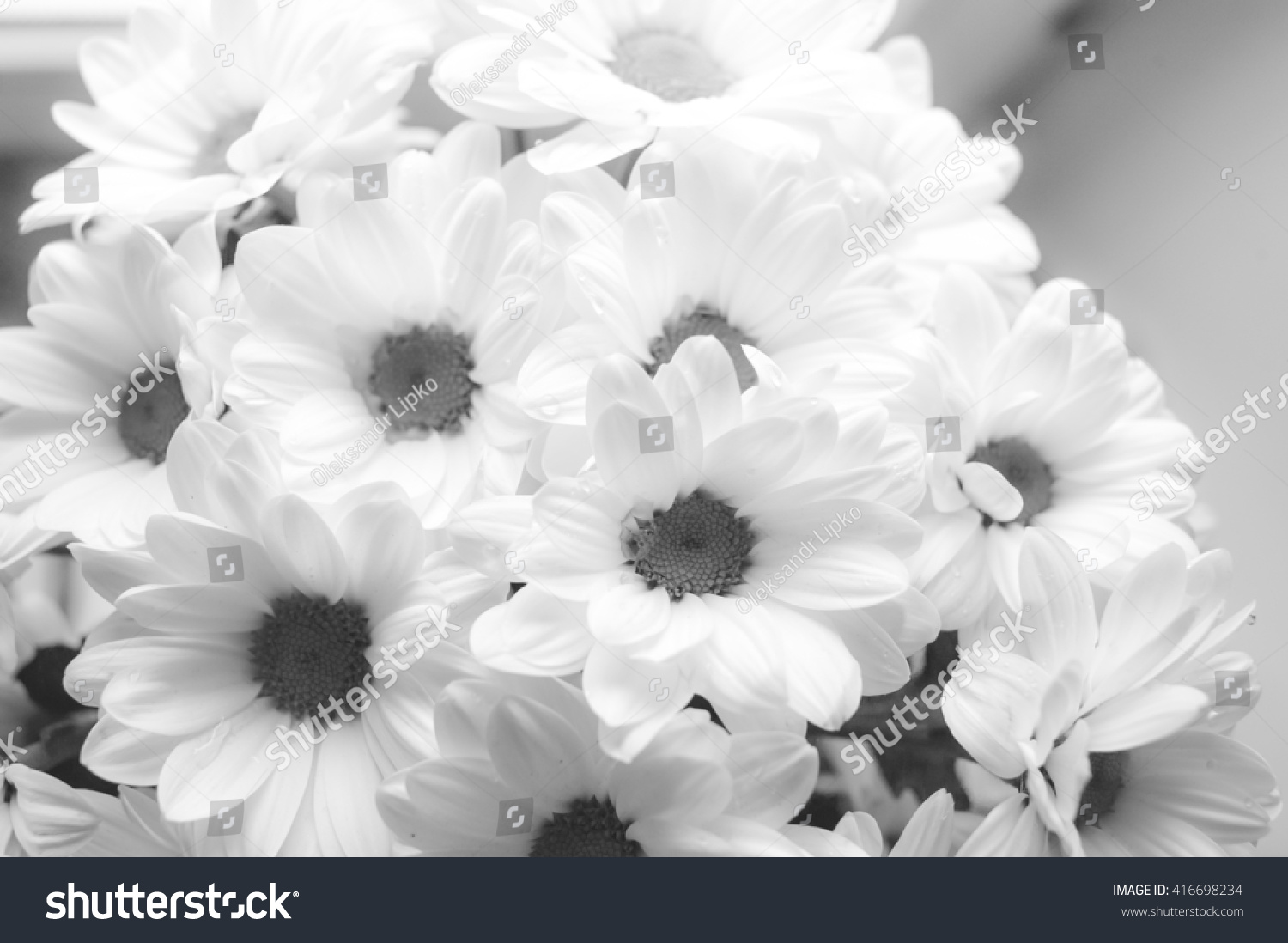 Close Up White Flower Background White Texture Background Black