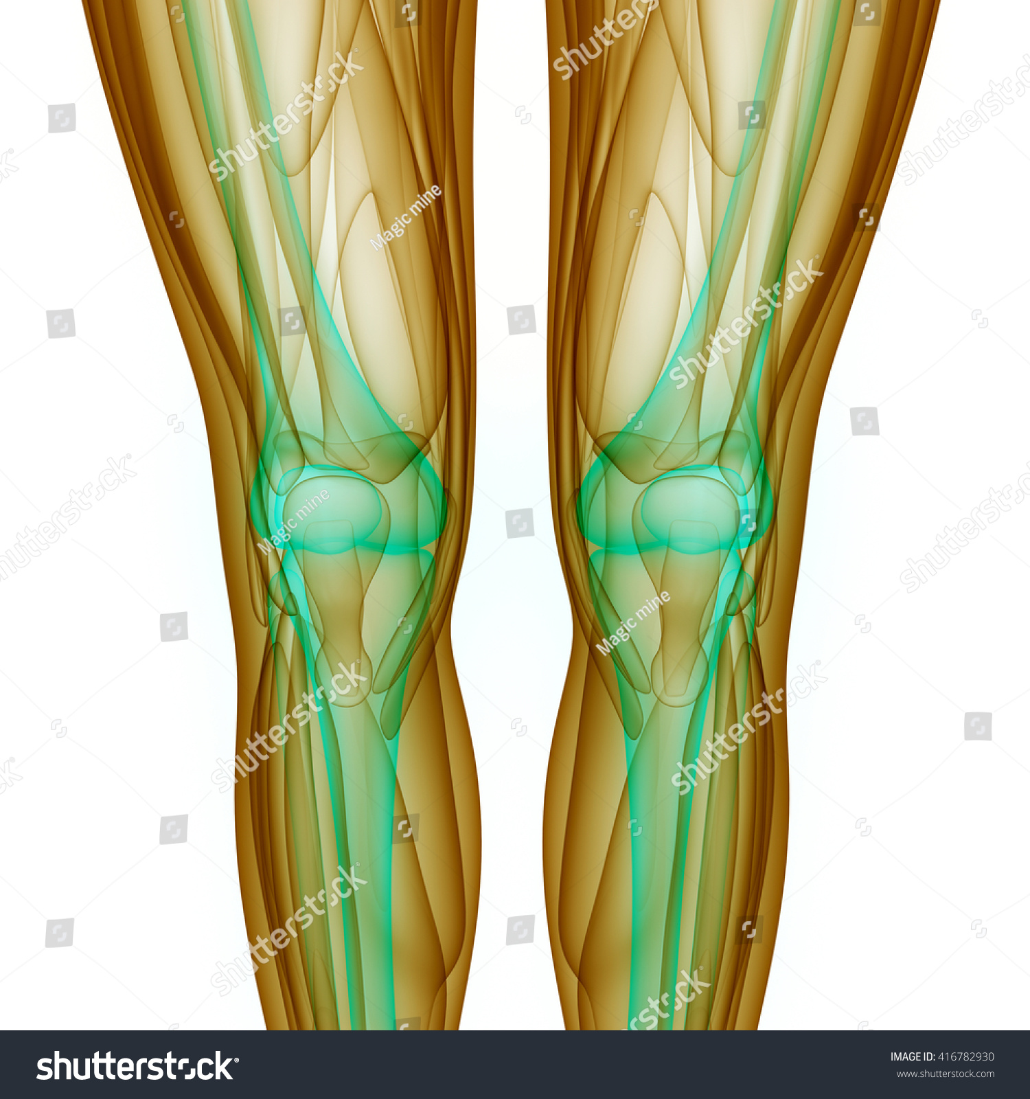 Royalty Free Stock Illustration Of Knee Joints Muscles 3 D Stock