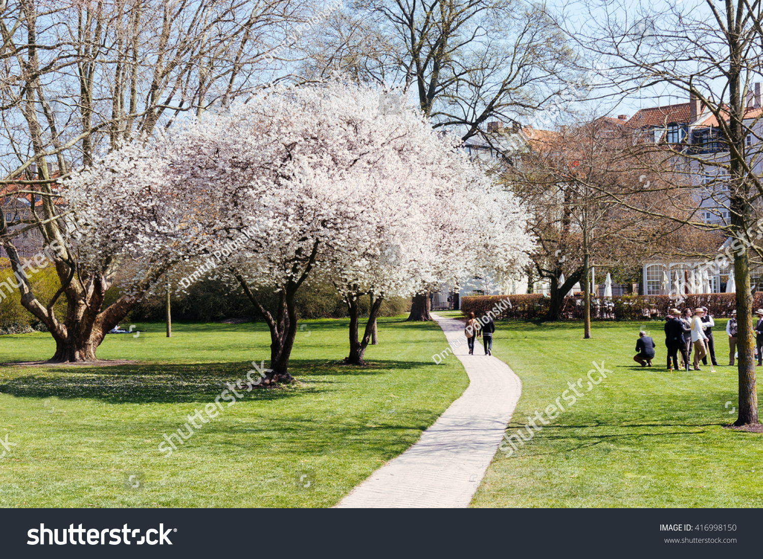White flowers tree blooming spring green stock photo royalty free white flowers tree blooming at spring in green park copenhagen denmark spring blossom mightylinksfo