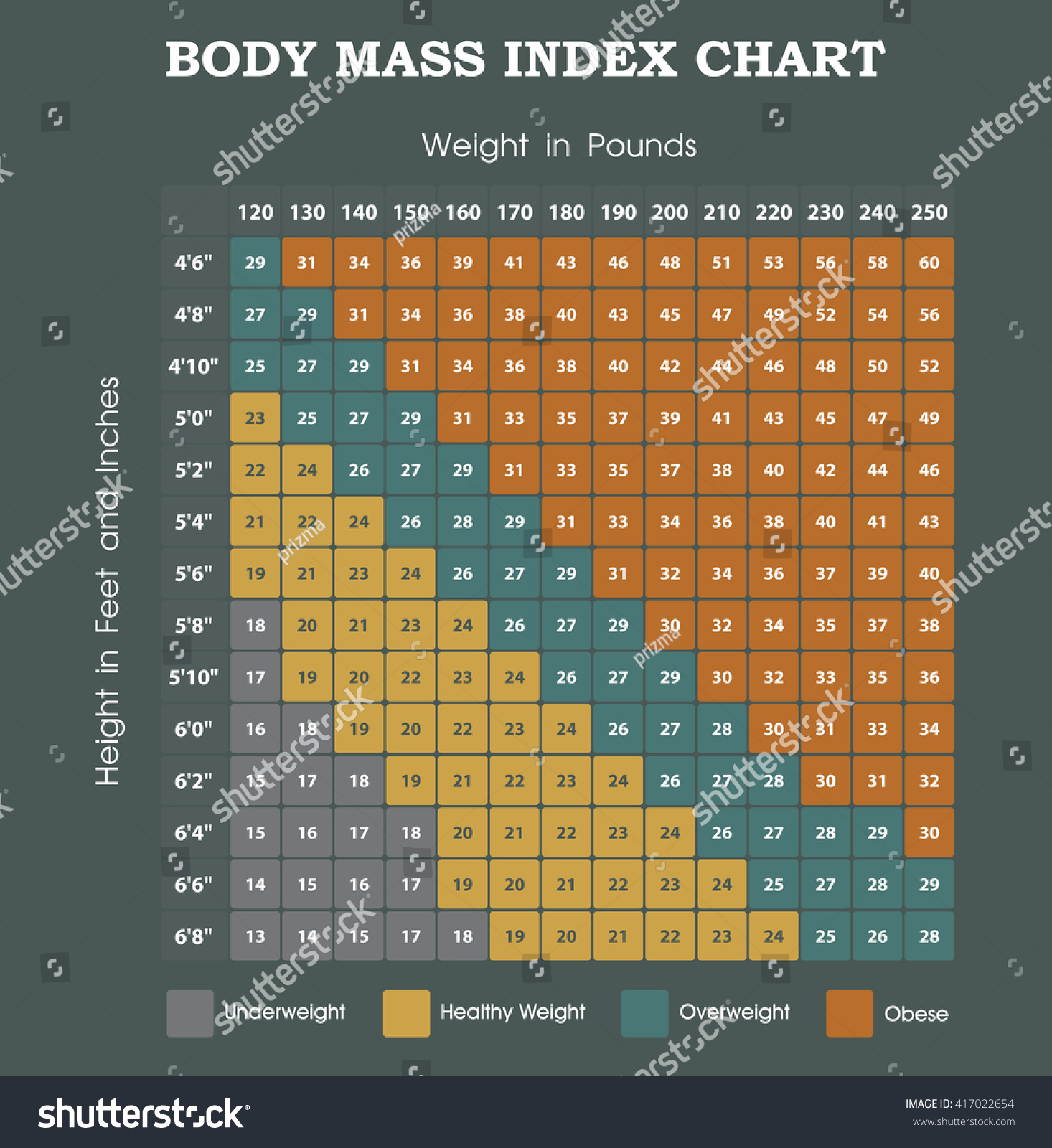 bmi body mass index essay
