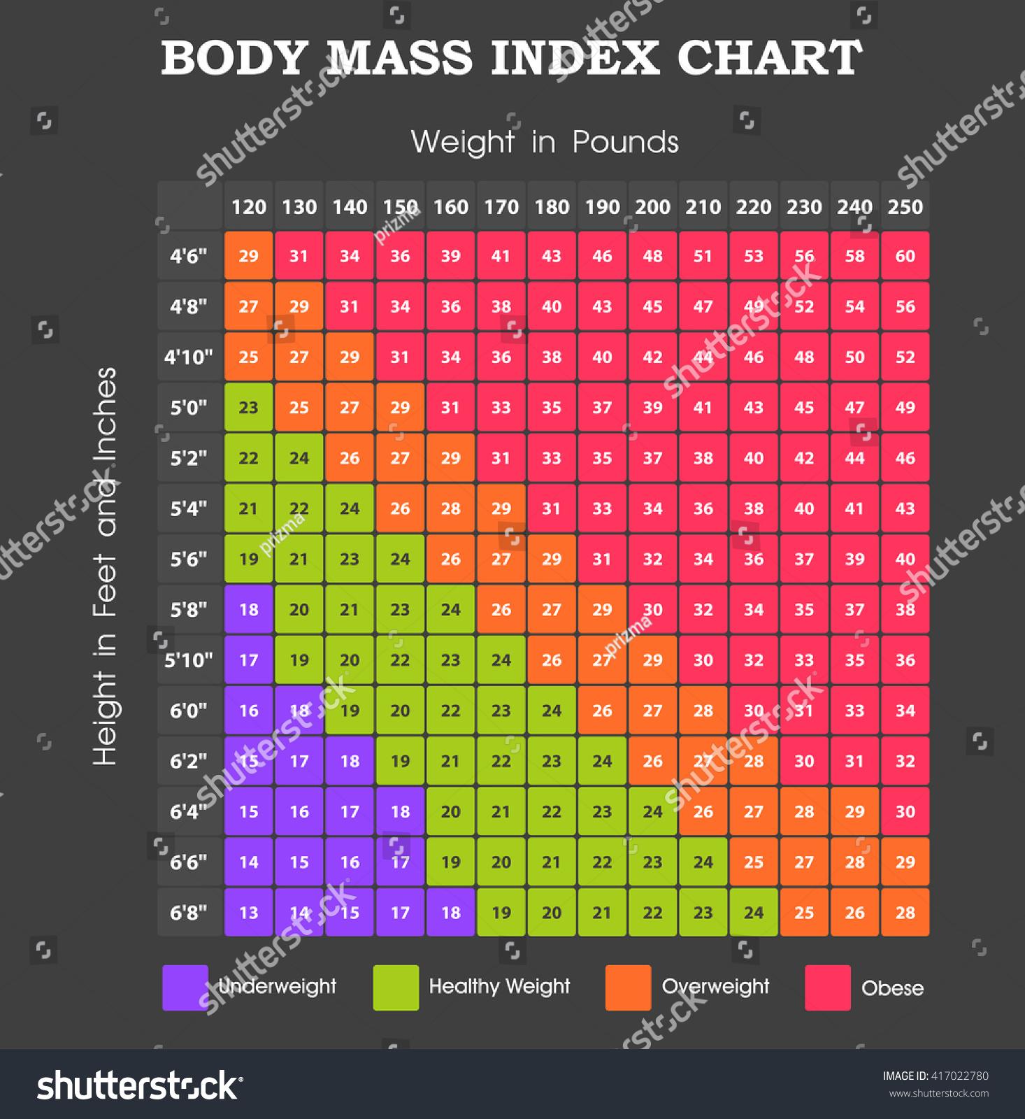 Body Mass Index Chart Height Weight Vector 417022780 – Bmi Index Chart Template