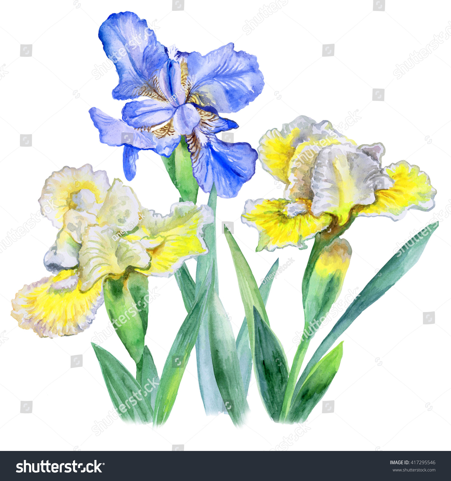 Flower Iris Drawing By Watercolor Hand Stock Illustration 417295546