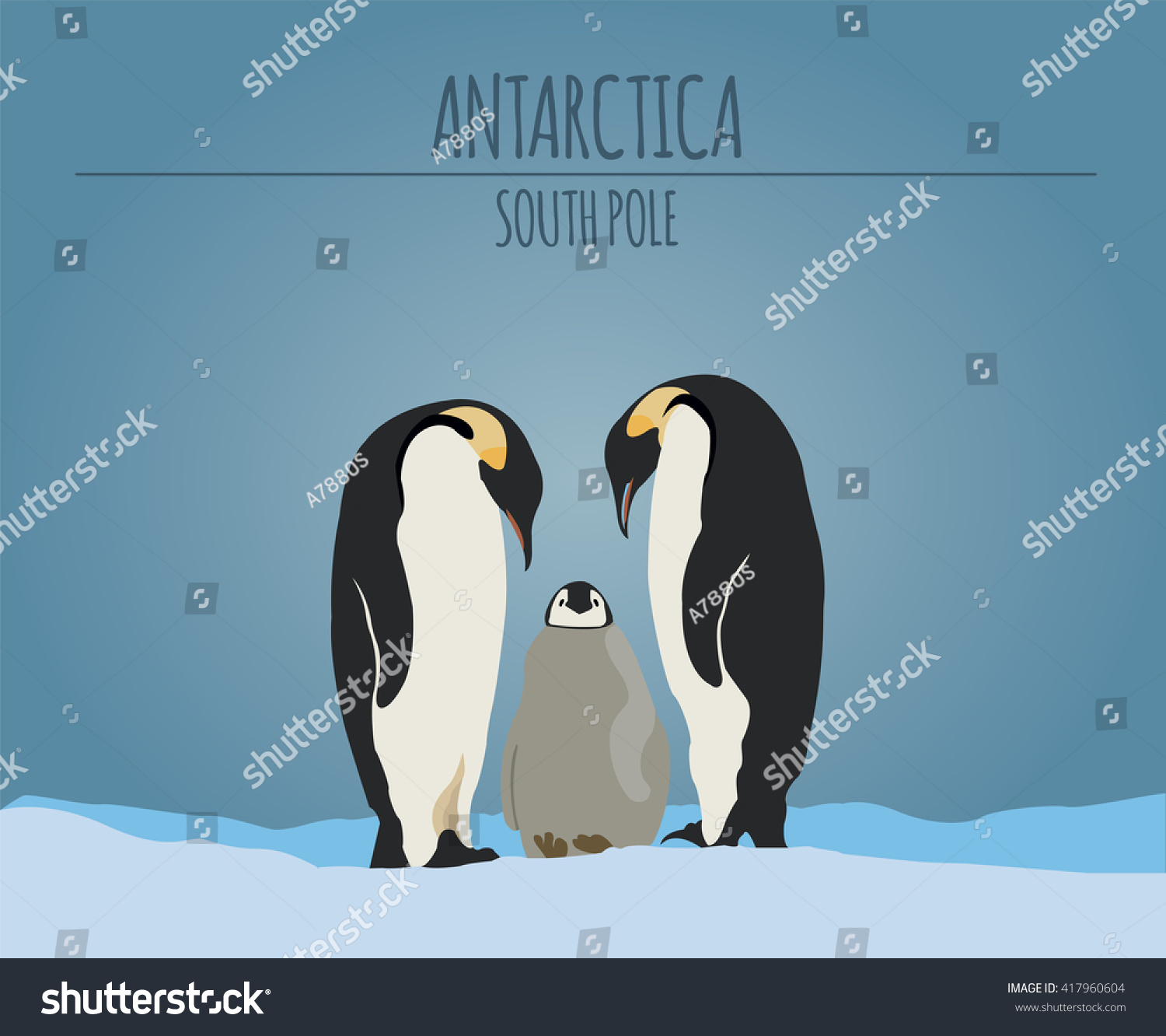 antarctica south pole graphic template vector illustration
