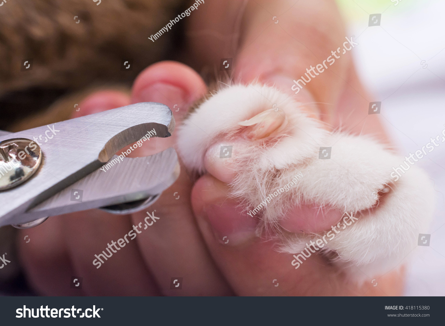 Cats Getting Nail Trimtrimming Cats Nailscutting Stock