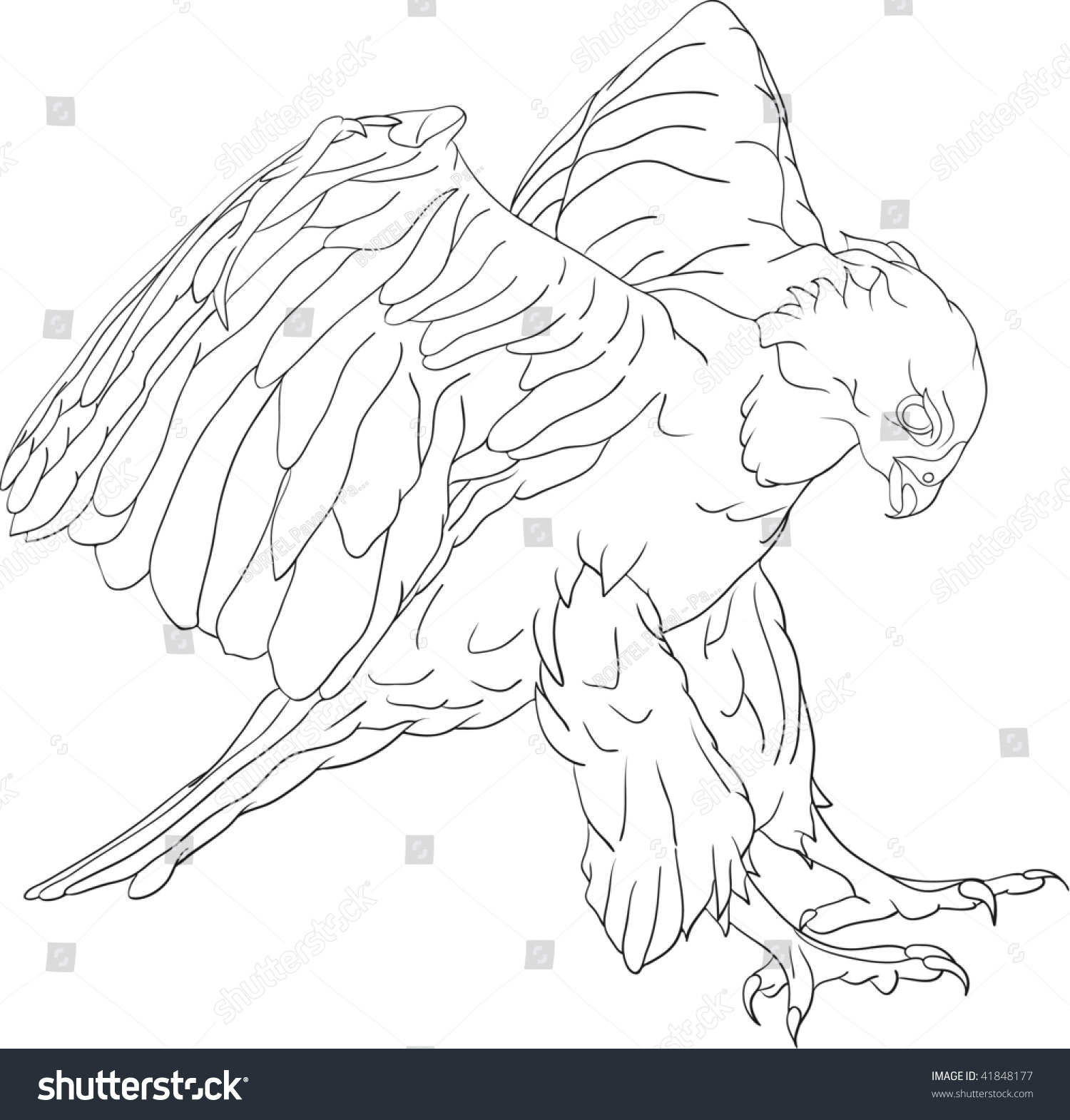 vector attacking hawk large talons stock vector 41848177