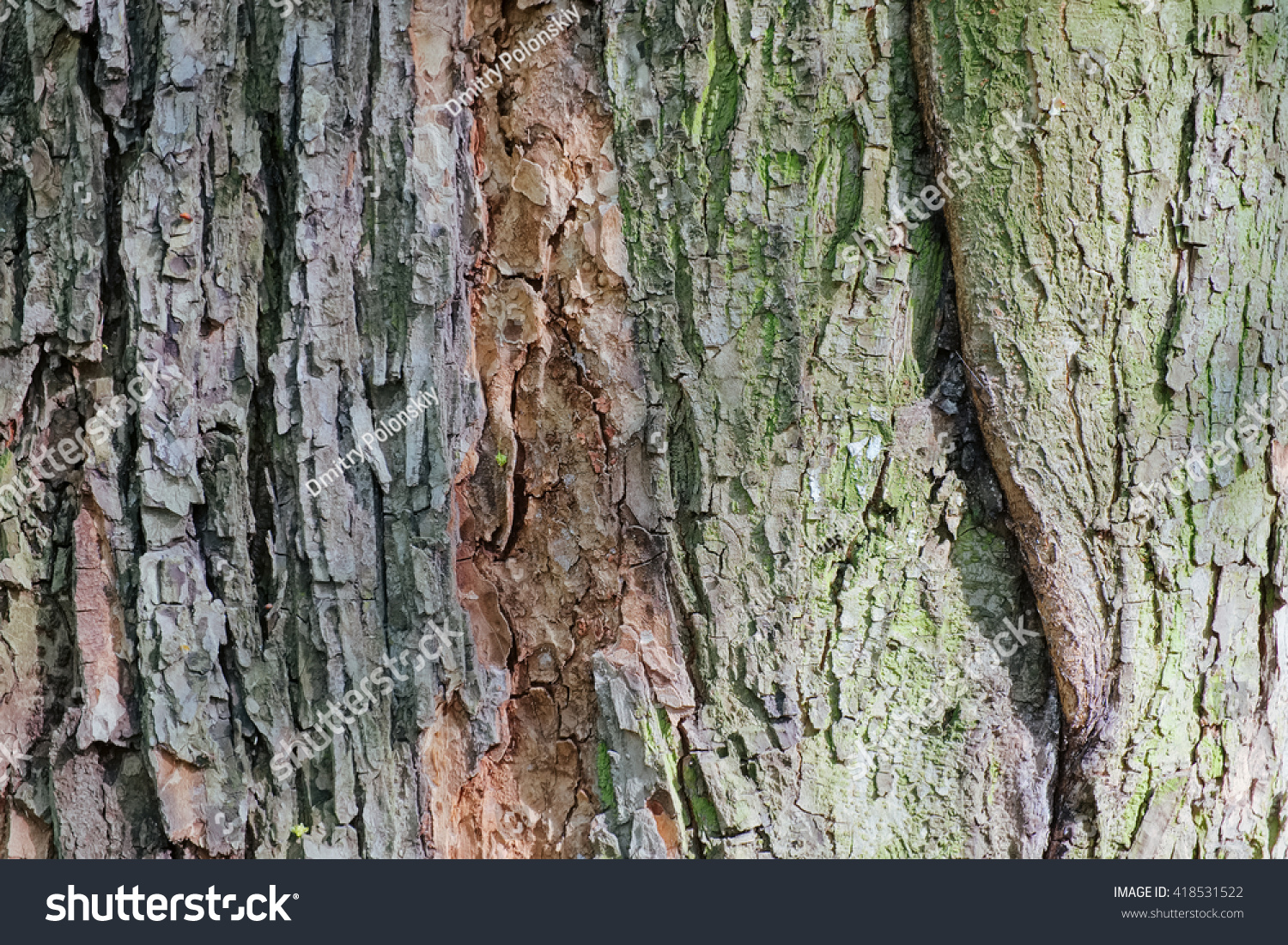 Colorful Old Tree Bark Background Texture Stock Photo (Safe to Use ...