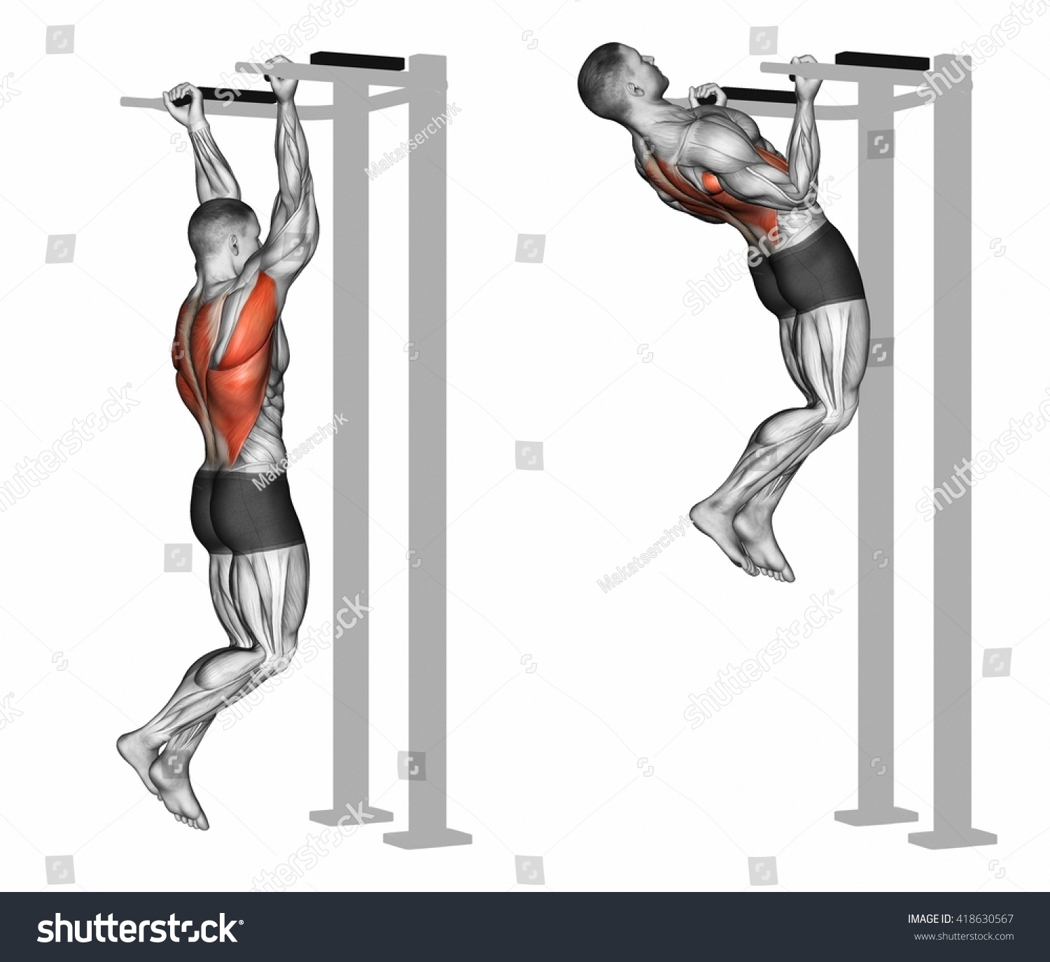 Reverse Grip Pullups On Back Muscles Stock Illustration 418630567