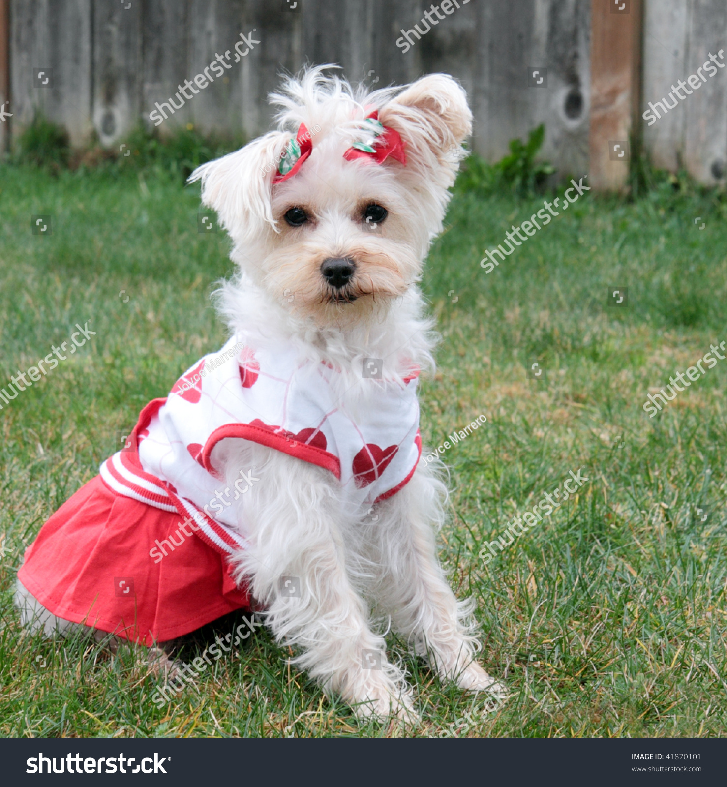 Cute White Toy Dogs - Noten Animals