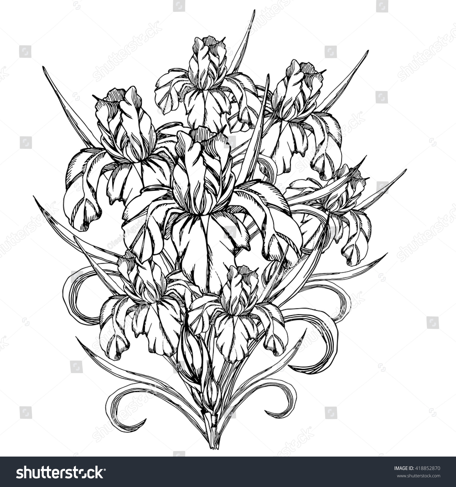 Sketch flower vector decorative trace iris flowers template stock sketch flowerctor decorative trace of iris flowerstemplate for coloring pages for adults izmirmasajfo