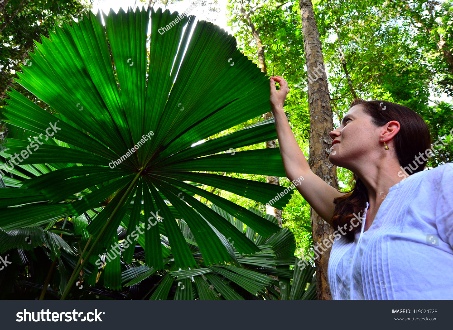 Fans taking pictures with cell phone behind barrier stock photo - Young Woman Touches An Australian Fan Palm Leaf In Daintree National Park In The Tropical North