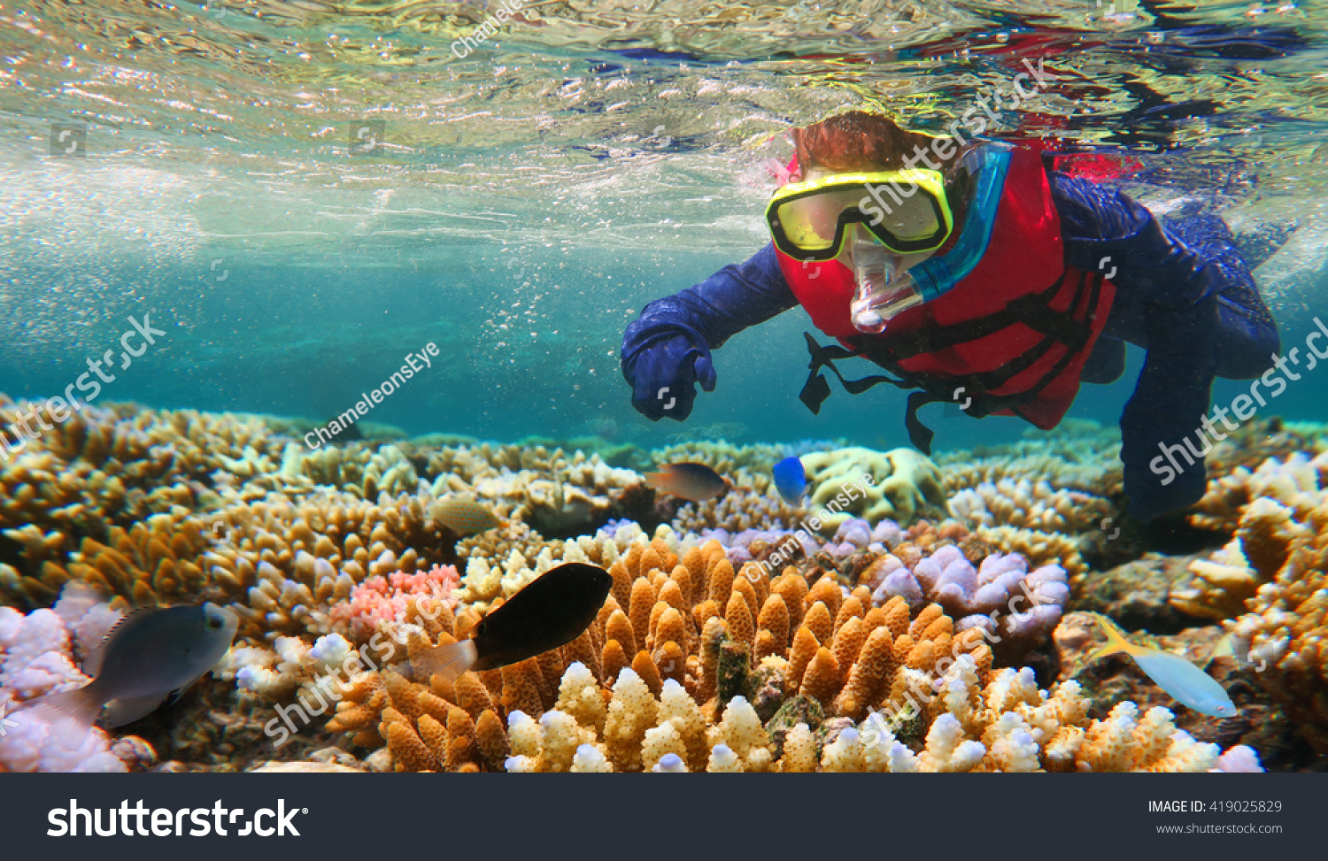 Child (girl age 5-6) snorkeling and dive with life jacket vest and Lycra protection suit in the Great Barrier Reef in the tropical far north of Queensland, Australia. Real people. Copy space