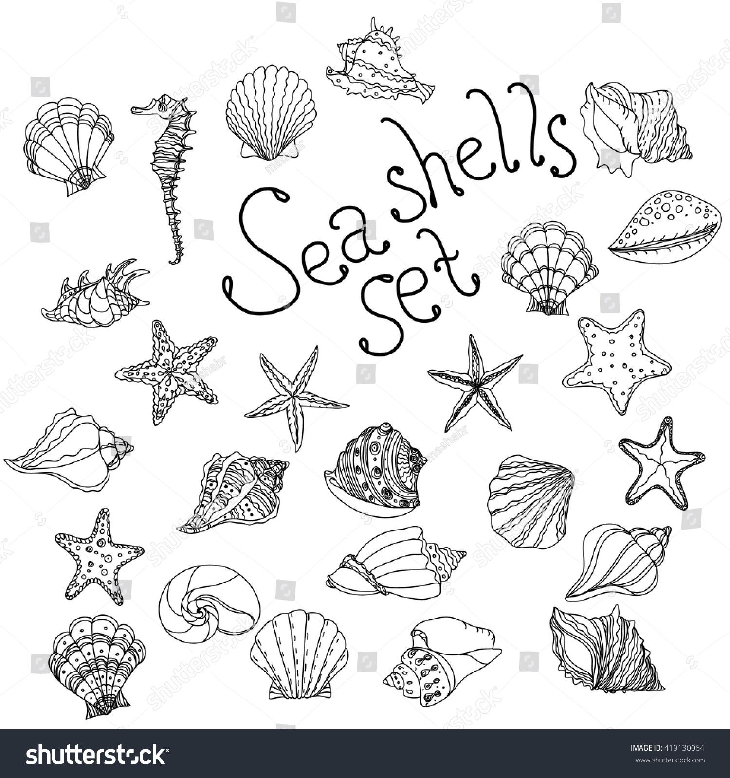 sea shell starfish seashell nautilus sea stock vector 419130064